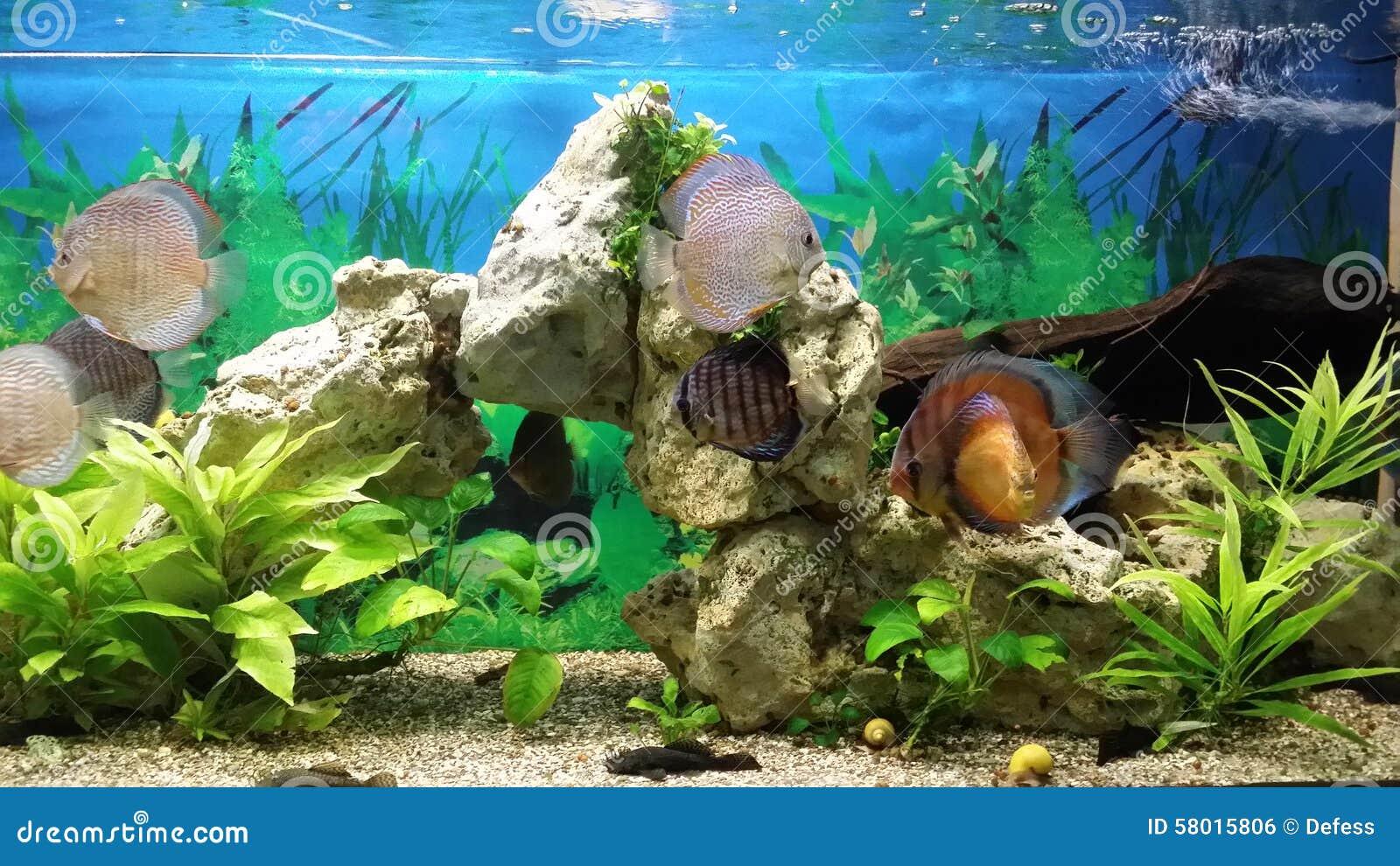 Peces marinos en el acuario foto de archivo imagen 58015806 for Peces de acuario