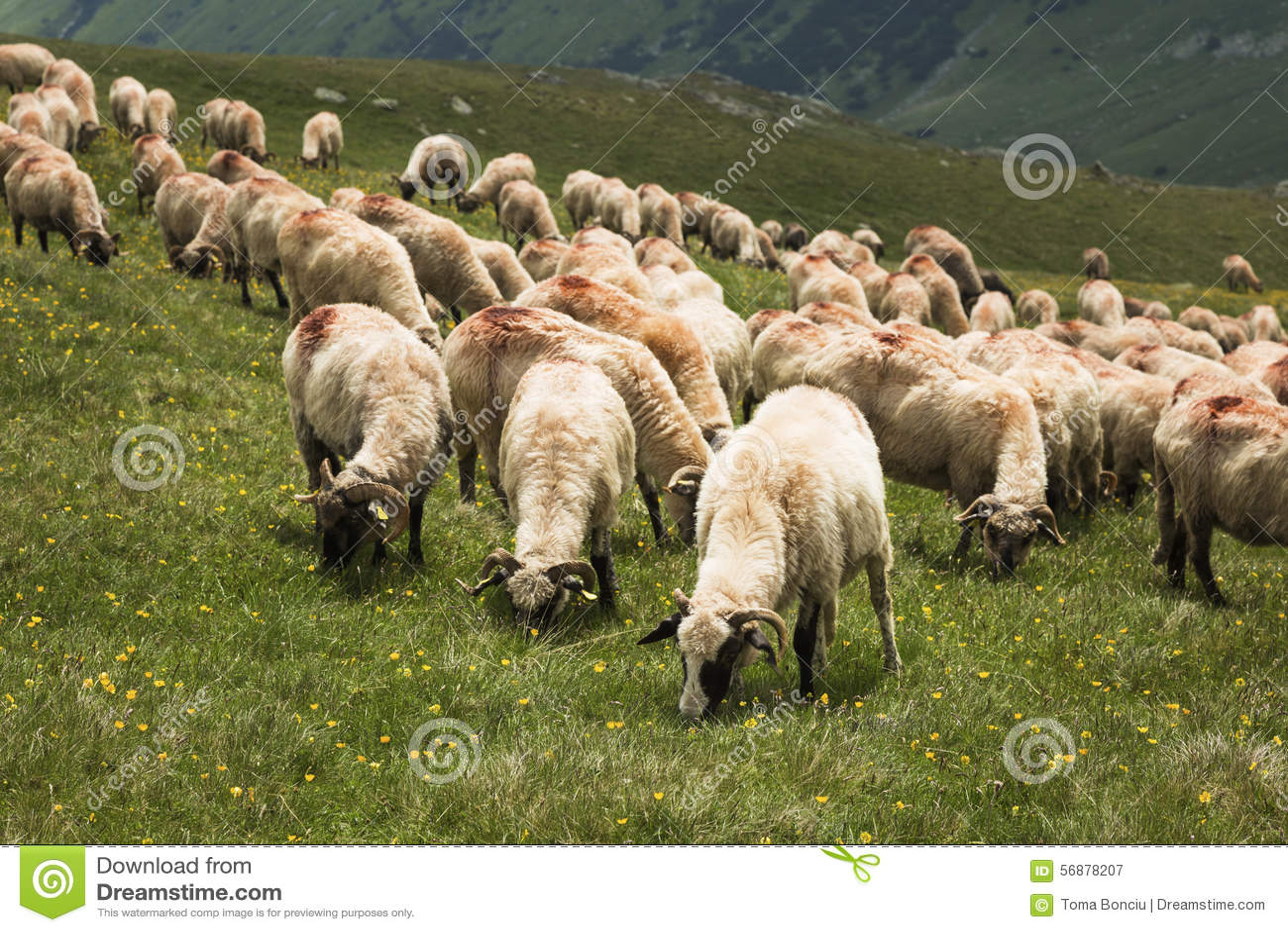 Pecore sulla montagna