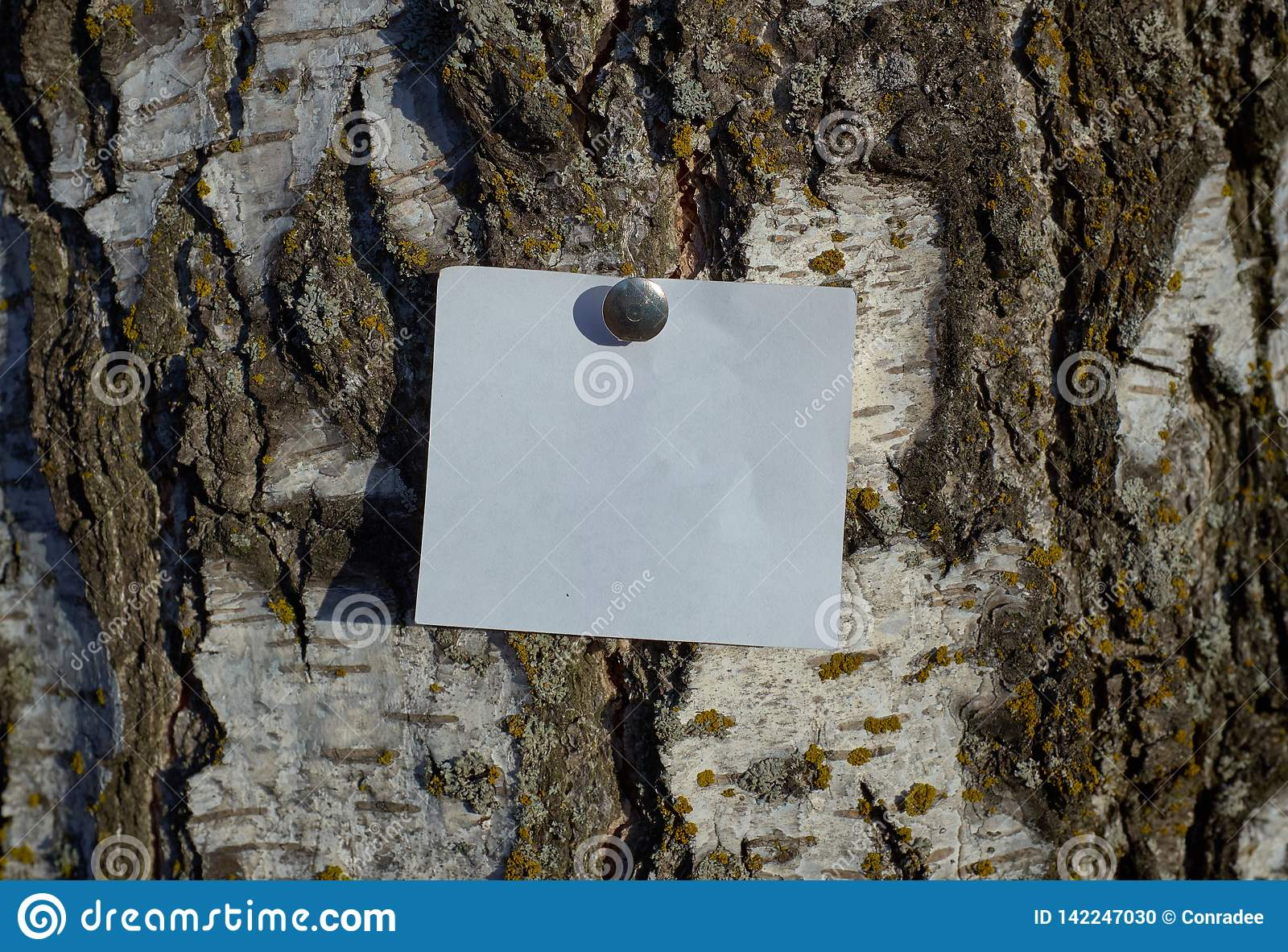 Pedazo blanco en blanco de papel de nota sujetado por el perno al árbol de corteza