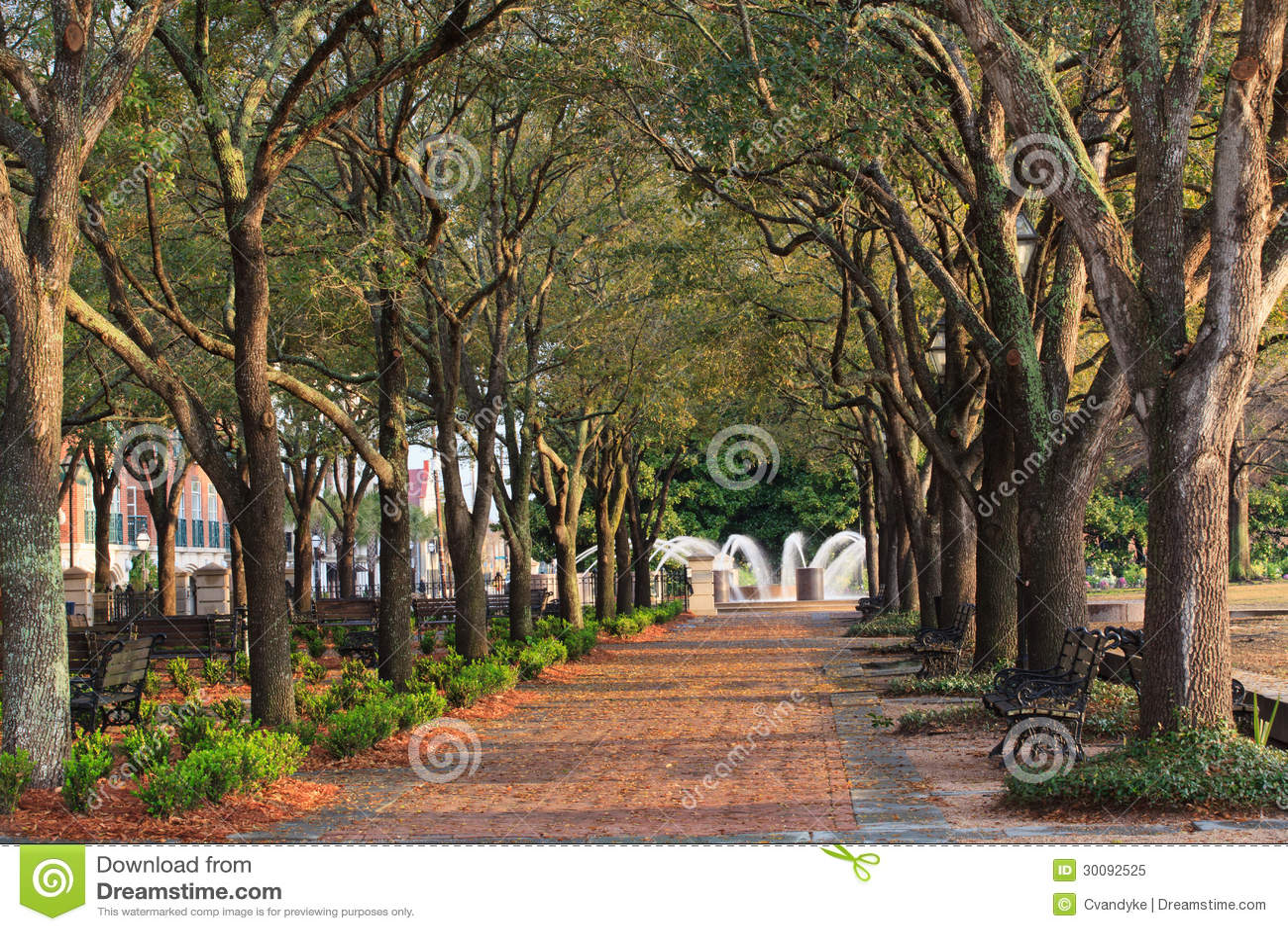Pedestrian Walkway Tree Canopy Charleston Sc Stock Image