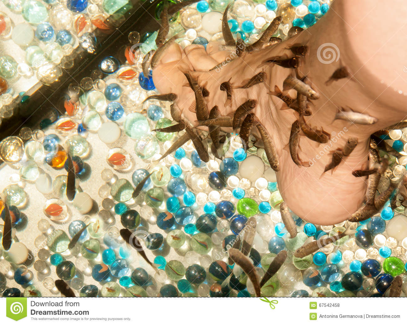 Pedicure by garra rufa fish stock photo image 67542458 for Fish pedicure price