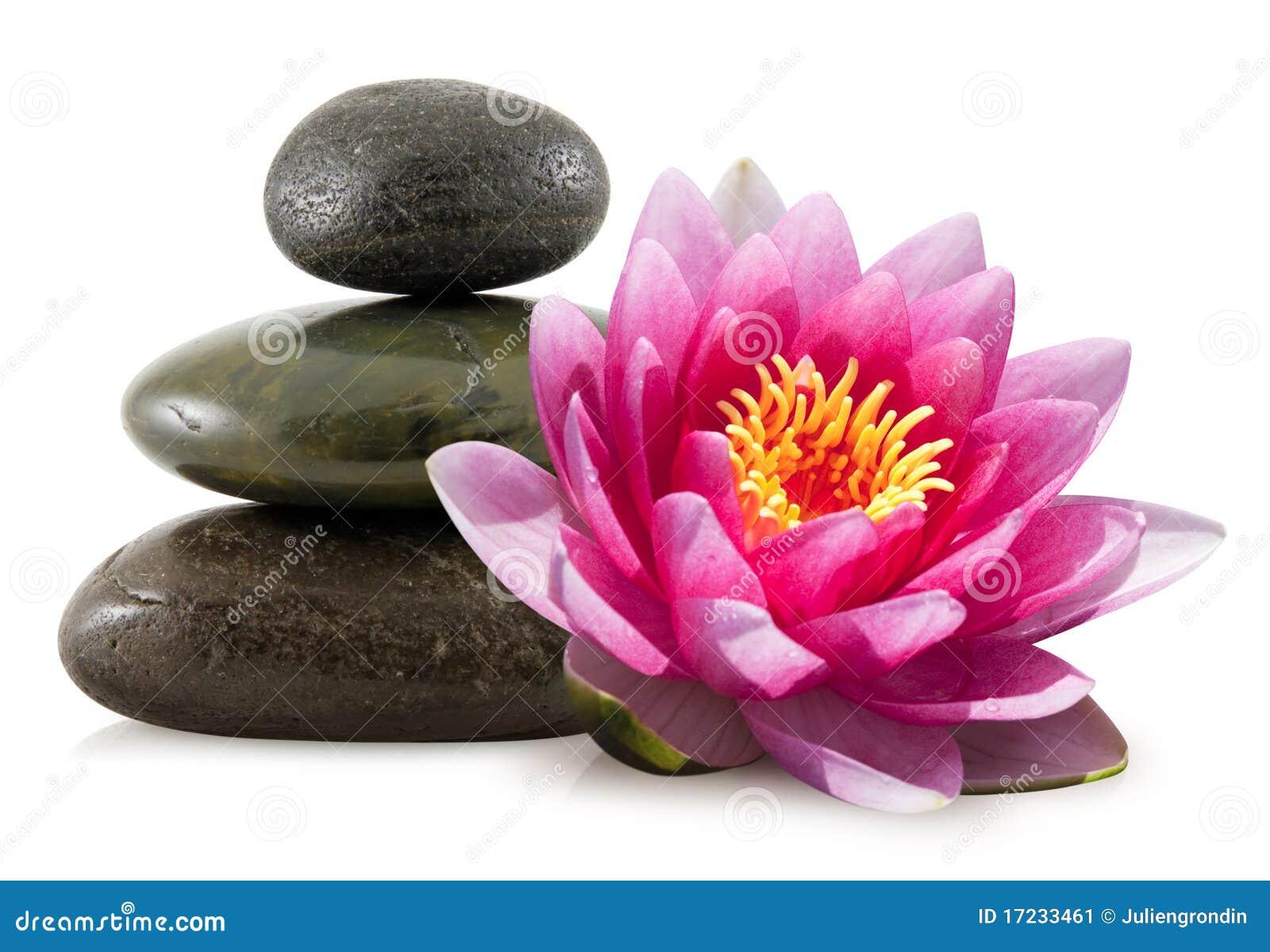 Pedras cor-de-rosa dos lótus e dos termas