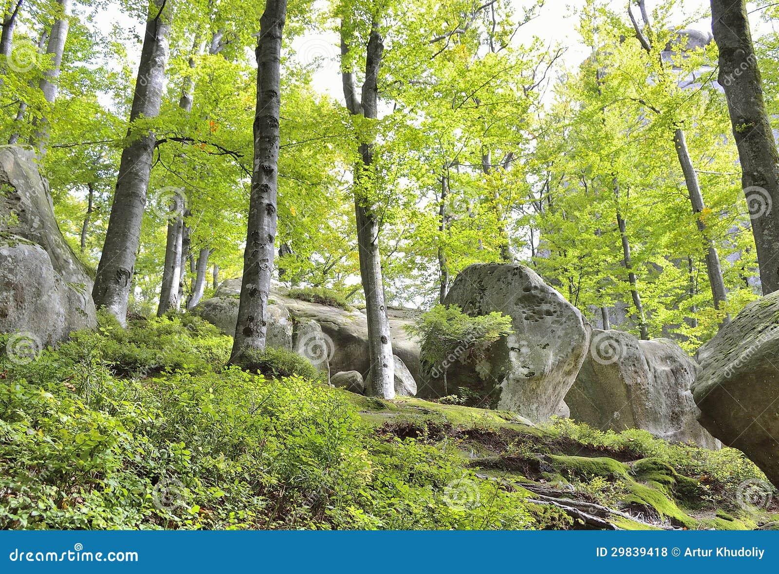 Pedras na floresta