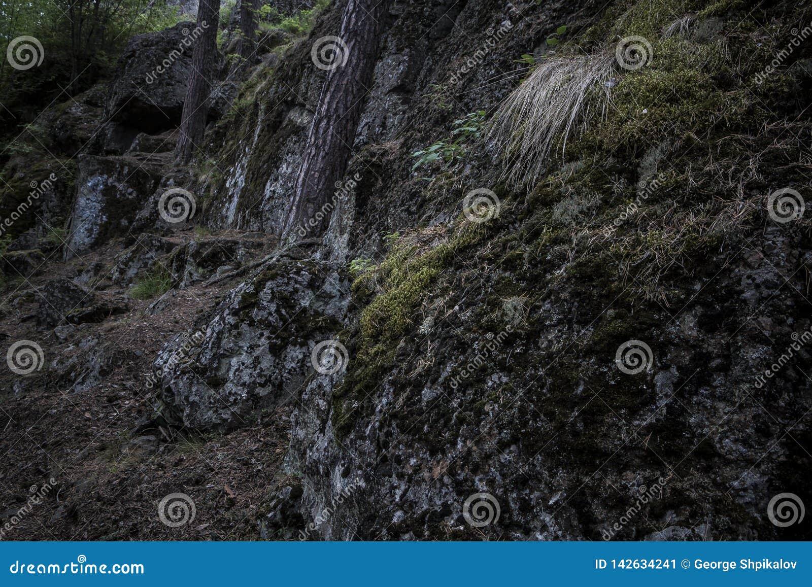 Pedregulhos escuros cobertos no musgo nas madeiras com as árvores que crescem acima