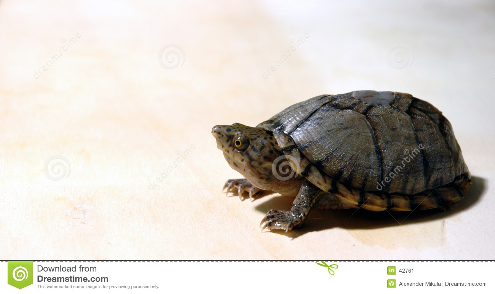 Peeking черепаха