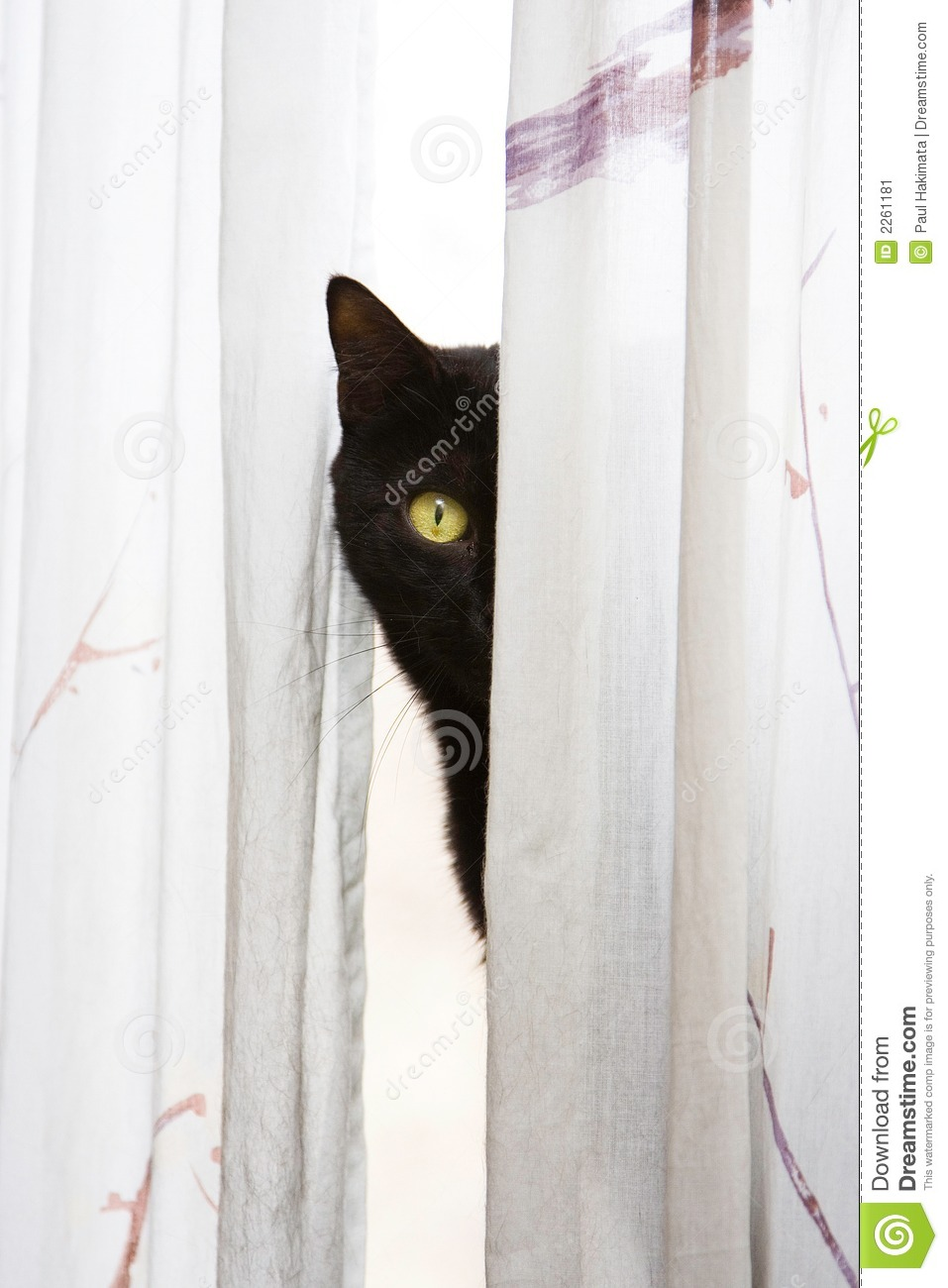Peeking Cat Stock Image Image Of Faces Pumas Animals