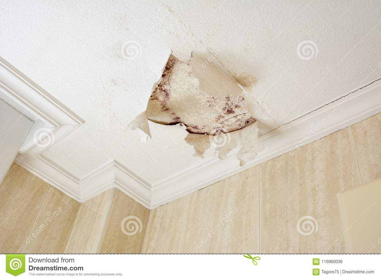 Peeling Paint Wall Of Water Leak In Plaster Ceiling Stock