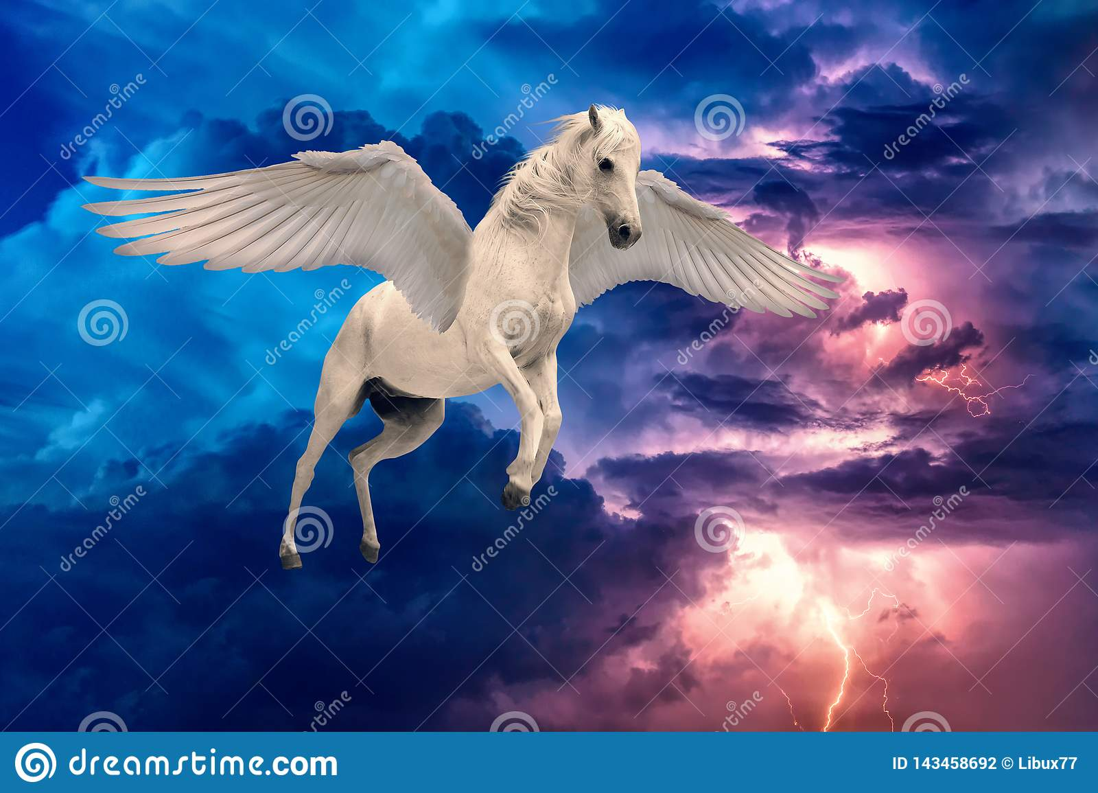 973 Horse Wings Photos Free Royalty Free Stock Photos From Dreamstime