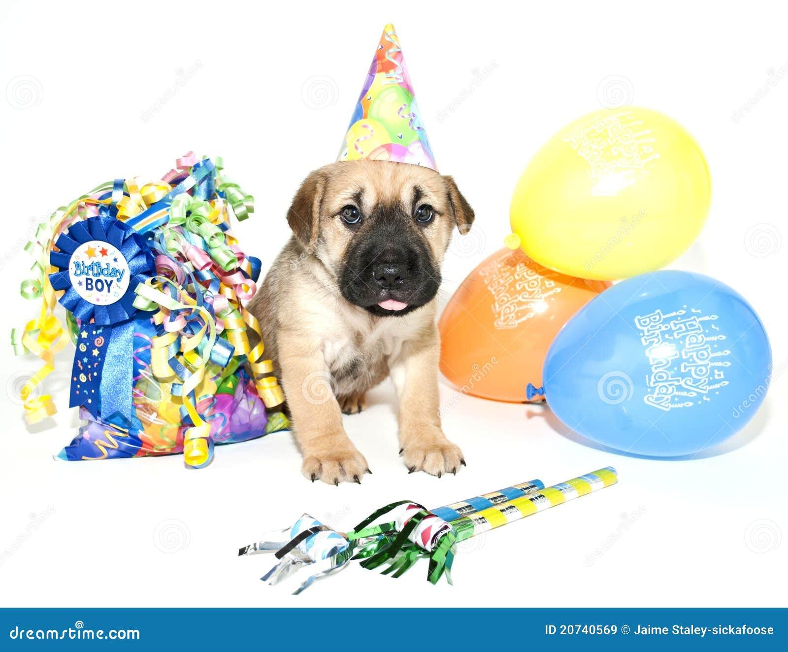 Pei de Shar del cumpleaños
