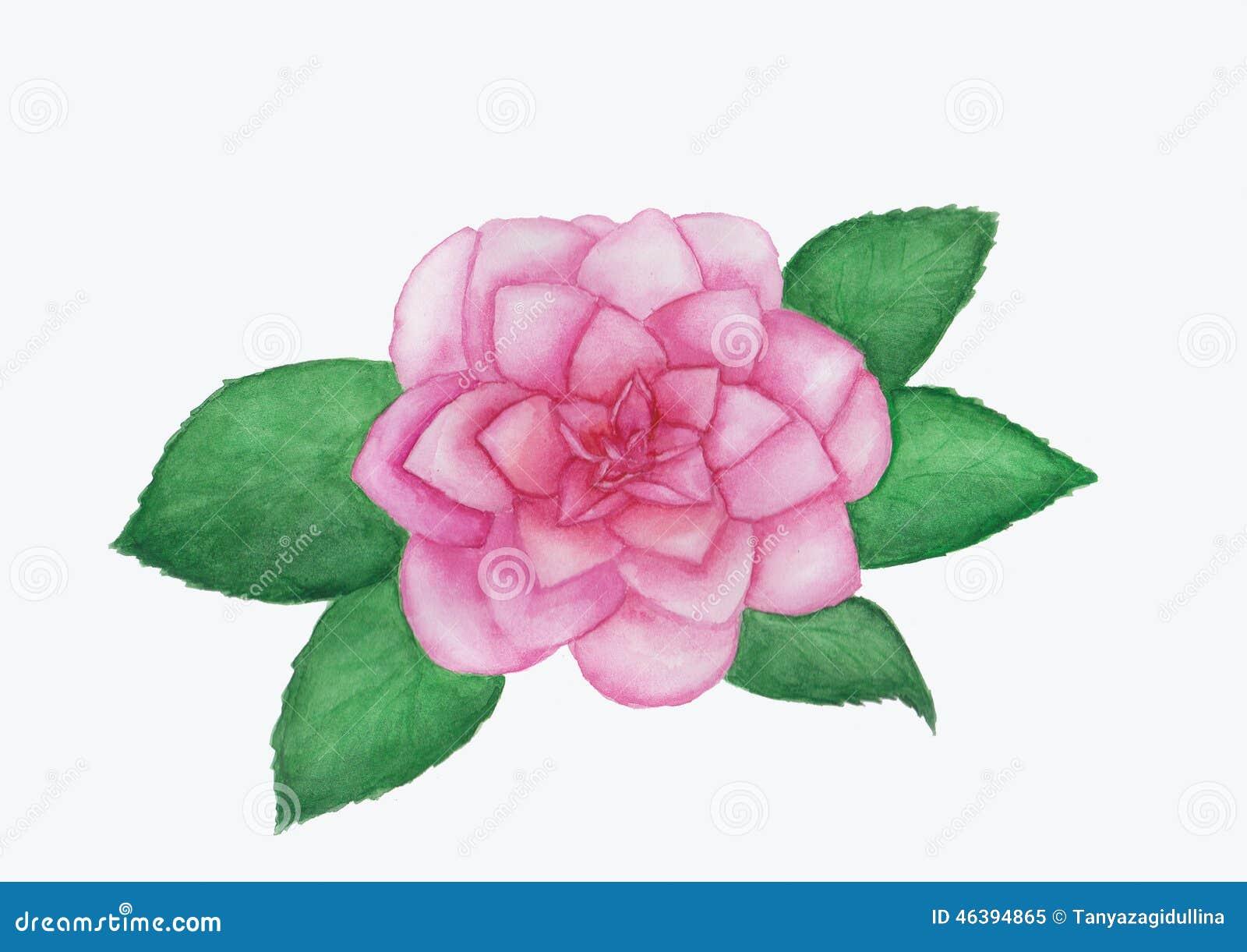 Peinture D Aquarelle De Fleur De Camelia Illustration Stock