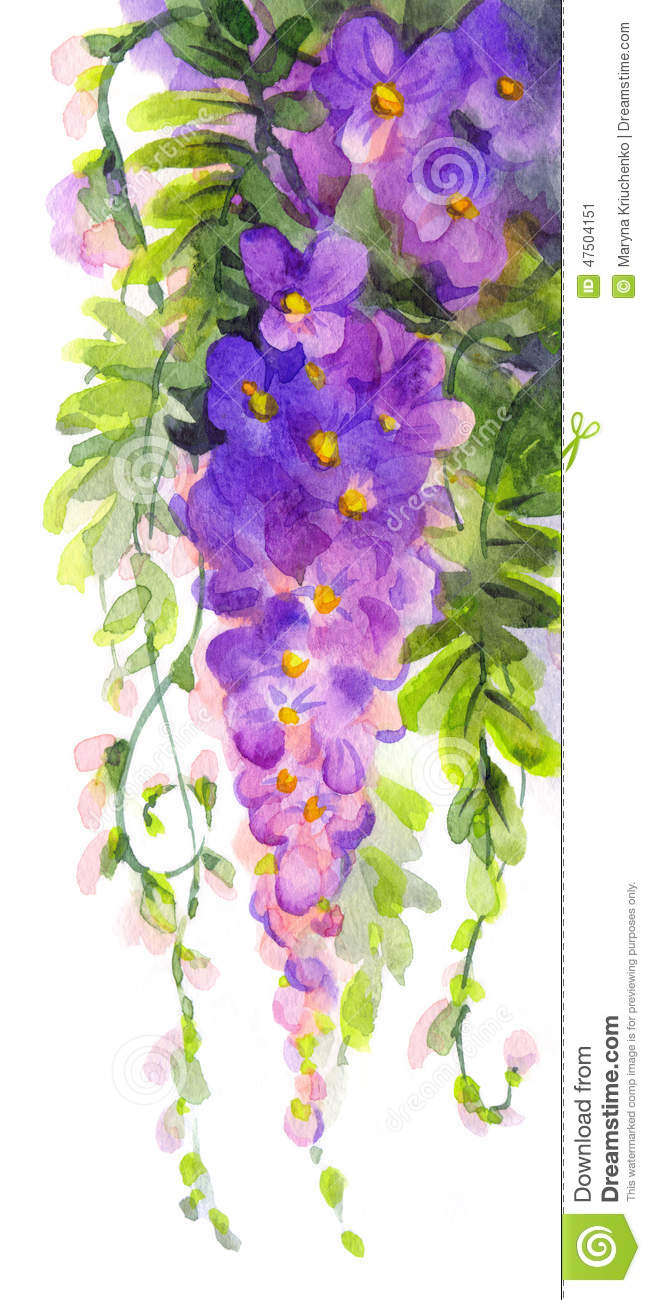 Peinture d 39 aquarelle glycine violette illustration stock for Peinture violette
