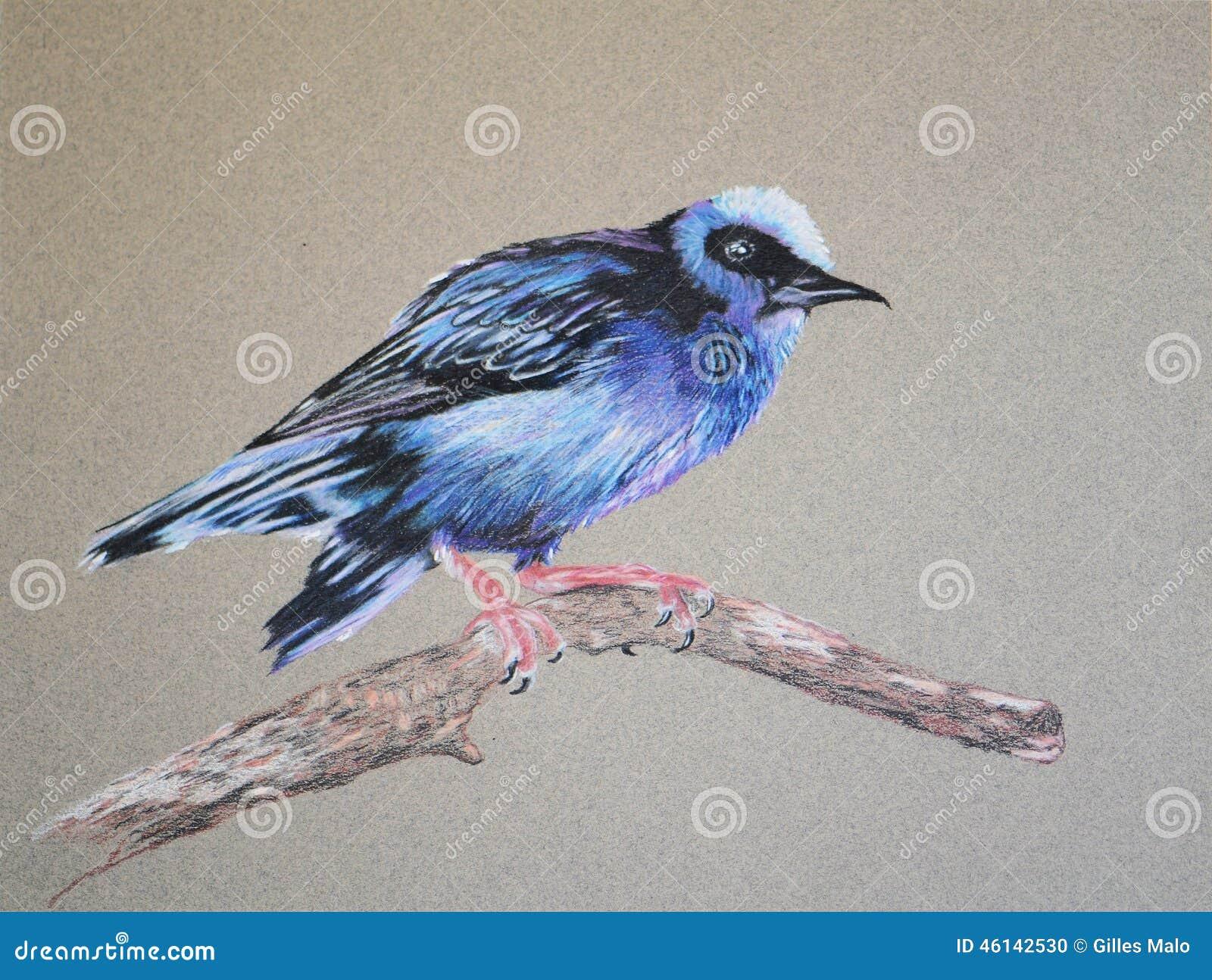article comme oiseau branche