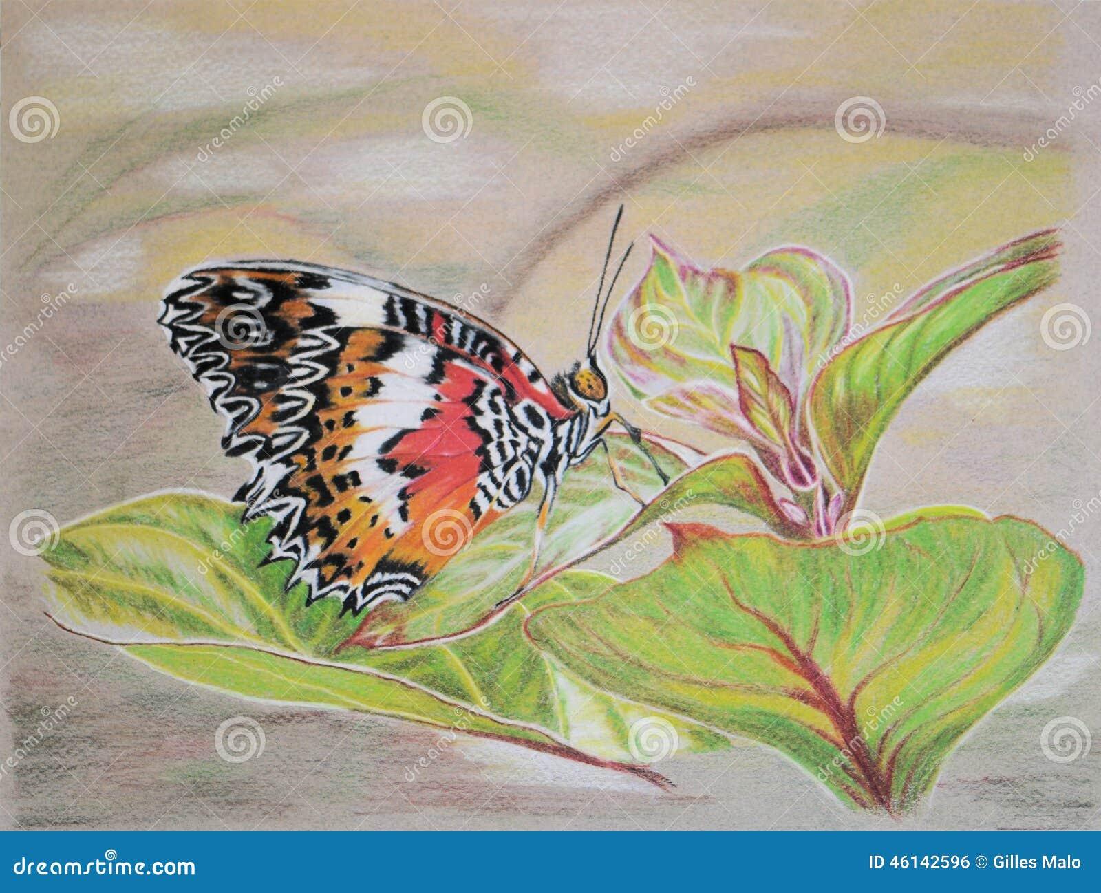 peinture de papillon de lacewing dessous illustration stock image 46142596. Black Bedroom Furniture Sets. Home Design Ideas