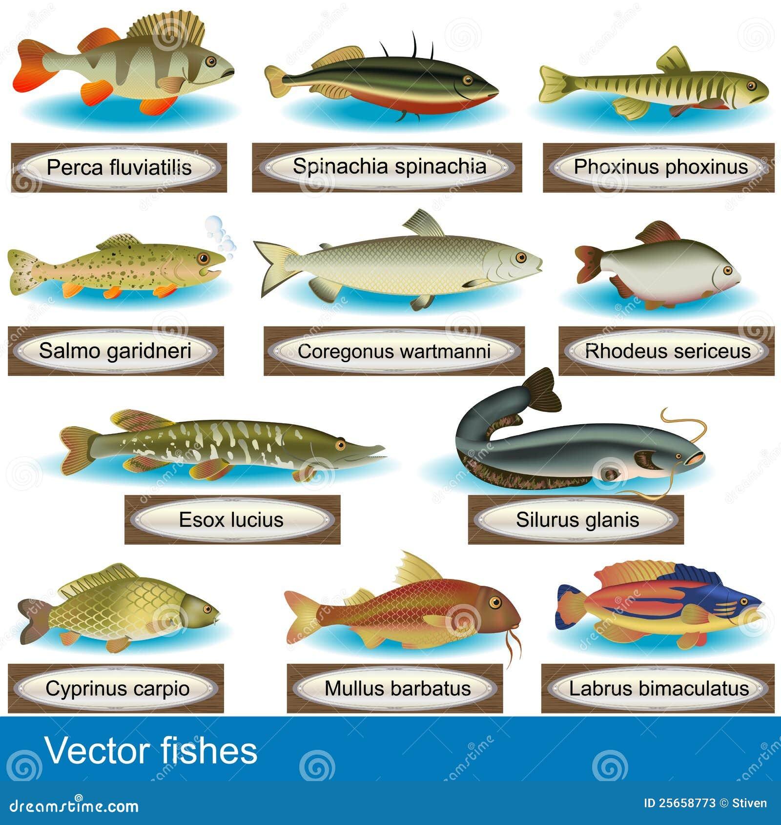 Ilustração do tipo diferente dos peixes, junto com seus nomes Latin.