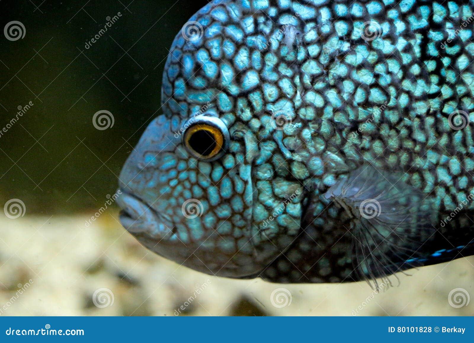 Peixes bonitos no aquário