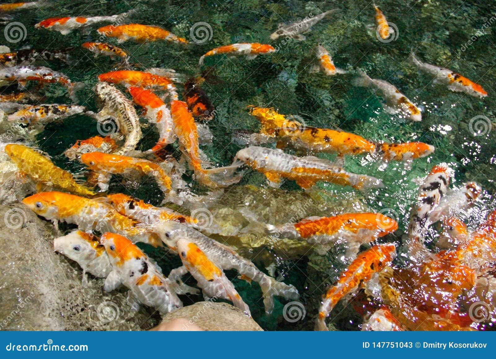 Peixes coloridos na ?gua do mar