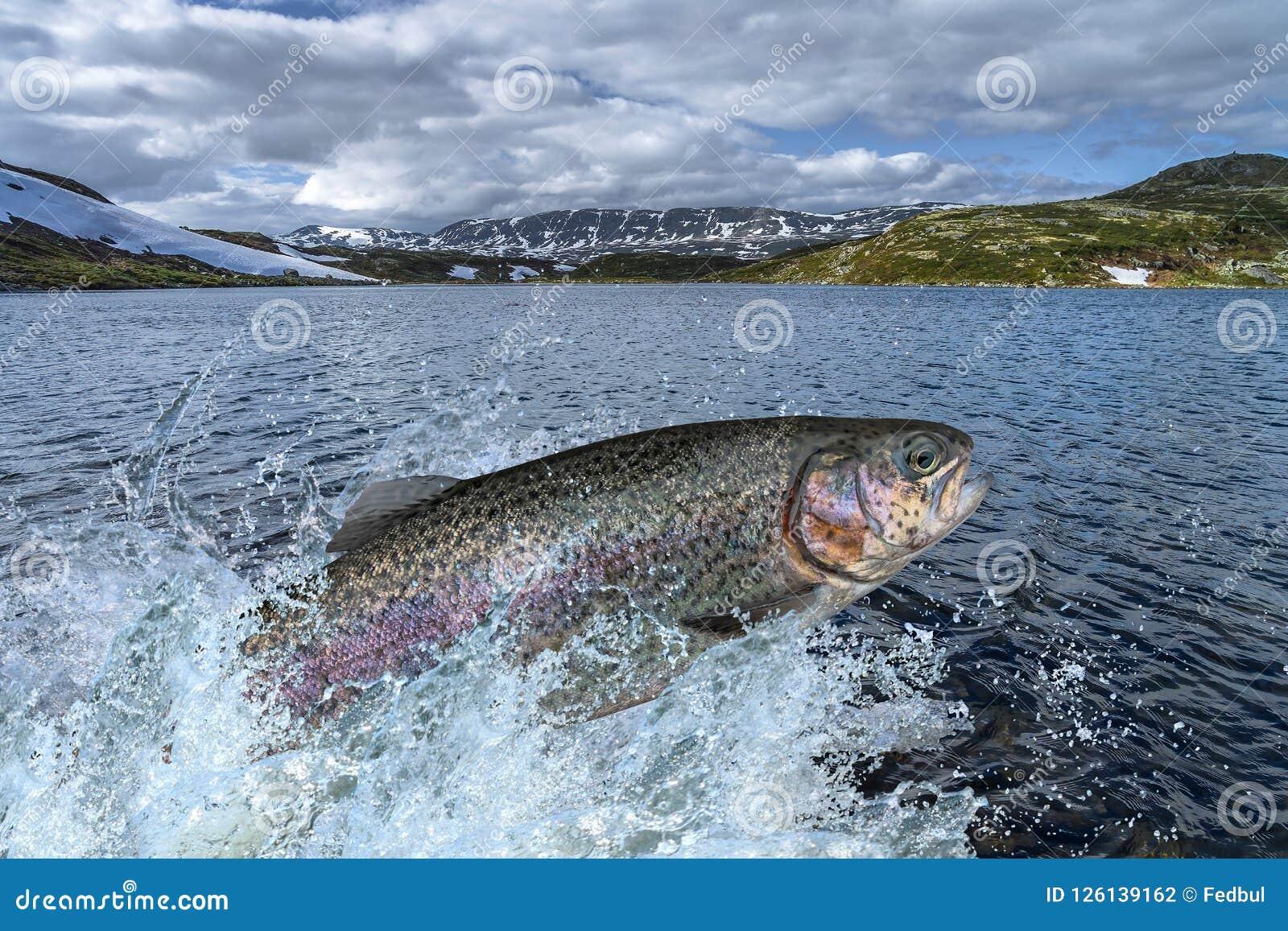 Peixes da truta que saltam com espirro na água