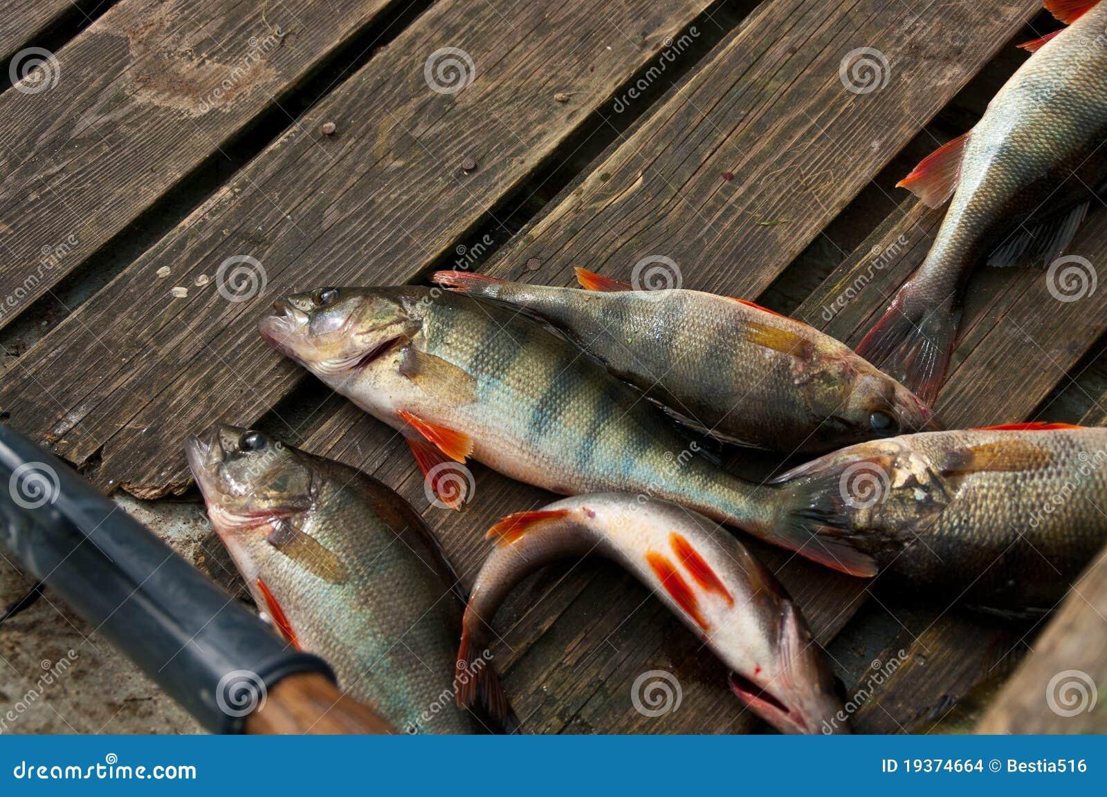 Peixes de água doce no barco