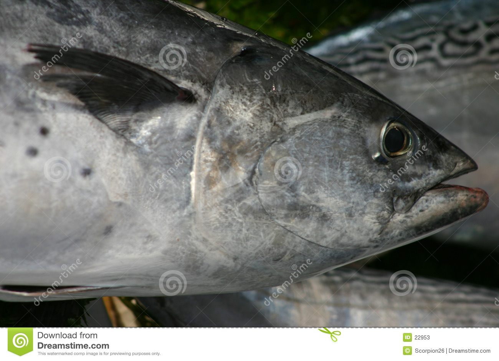 Peixes de atum
