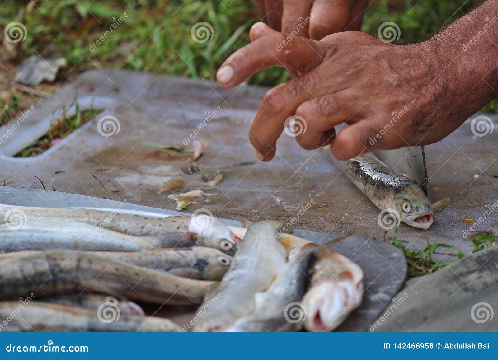 Peixes de limpeza de uma truta da pessoa para cozinhar em um acampamento