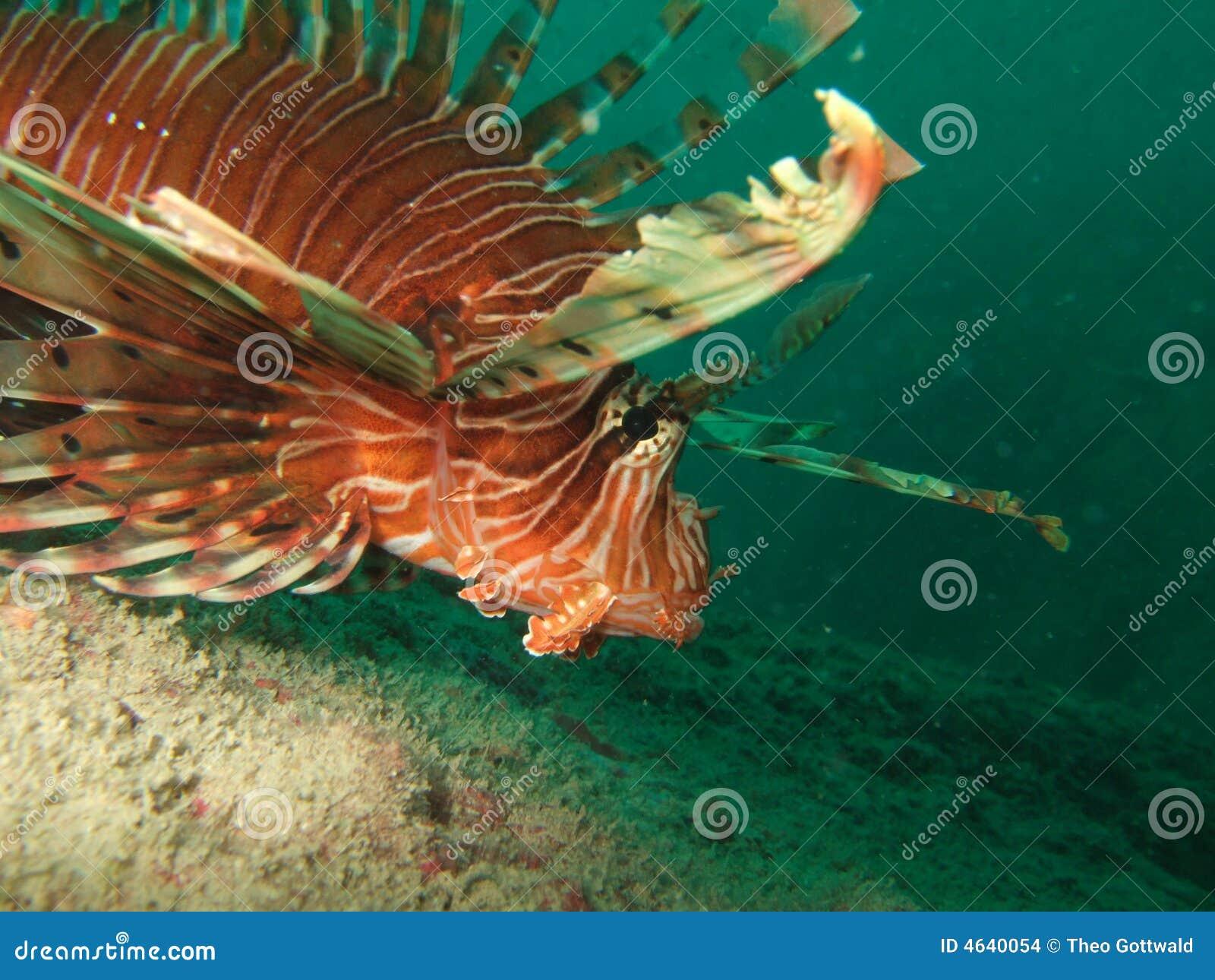 Peixes do leão