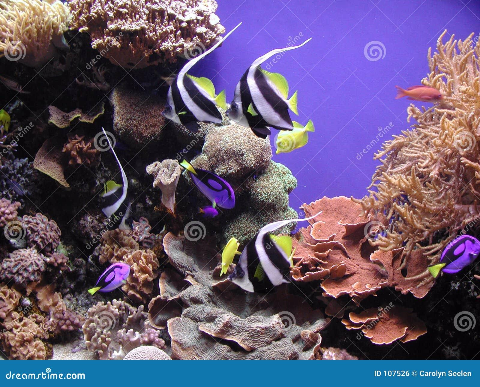 Peixes e corais do recife