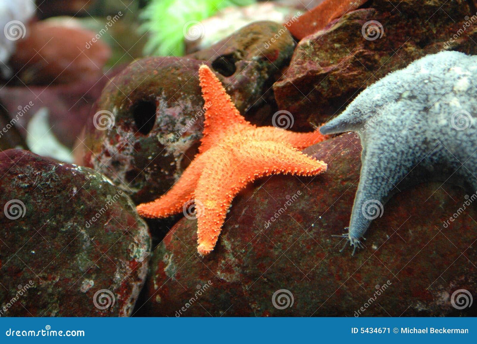 Peixes exóticos 2