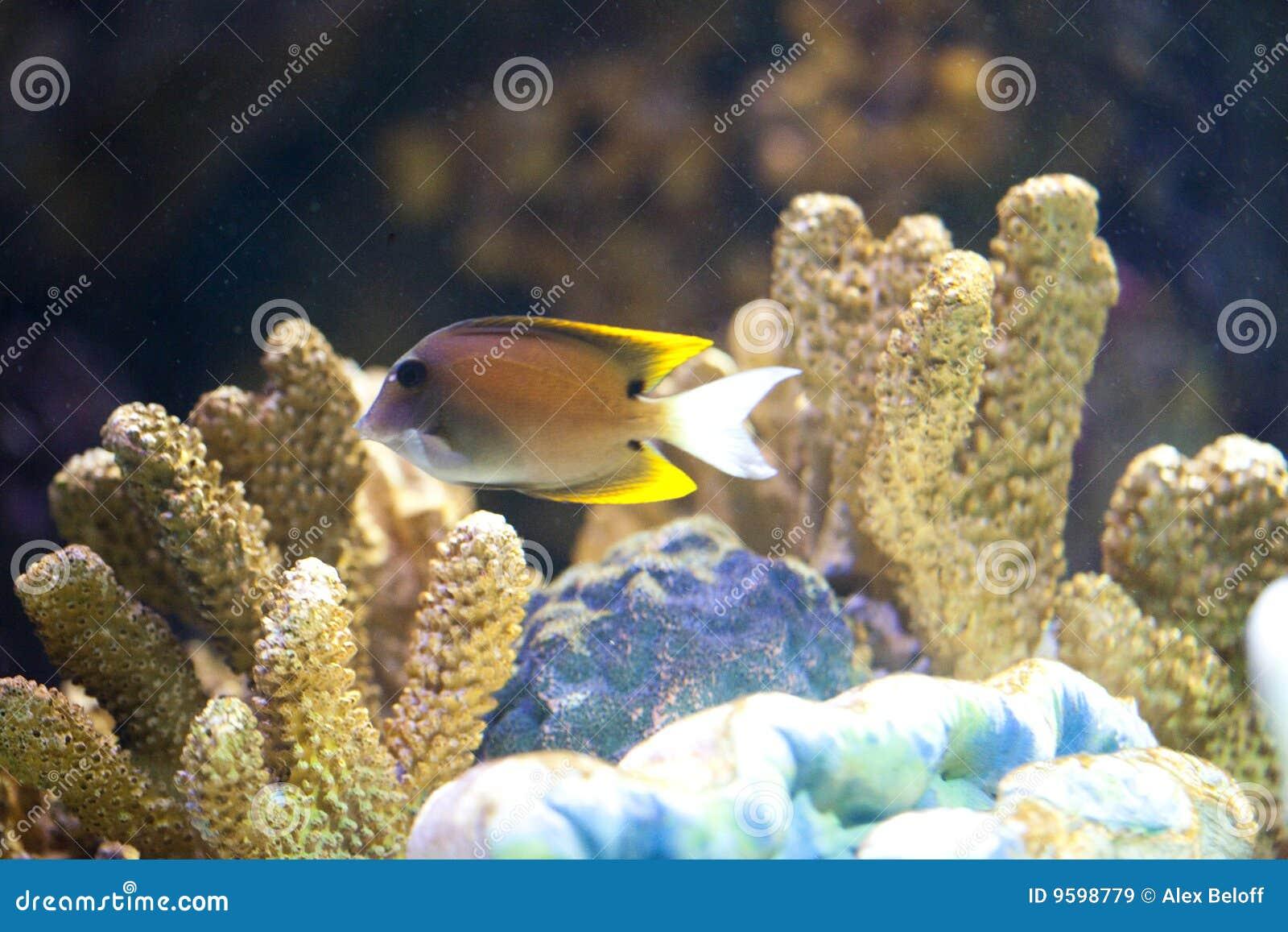 Peixes exóticos no tanque