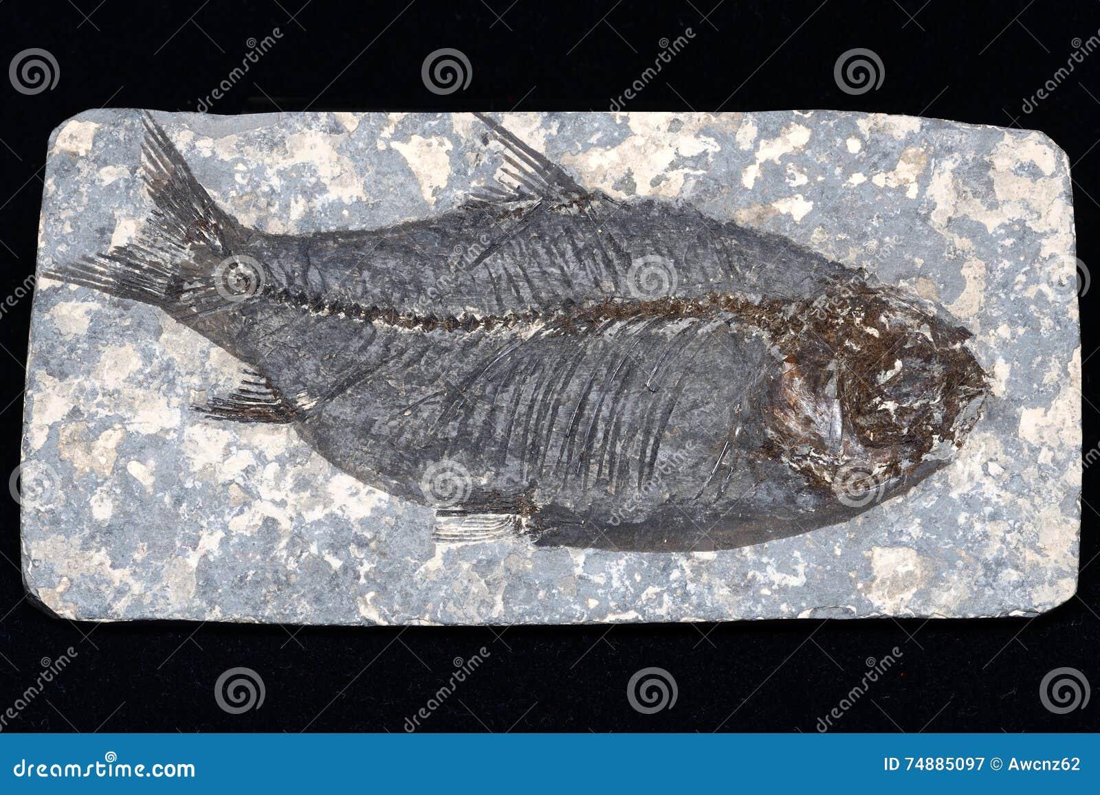 Peixes fossilizados