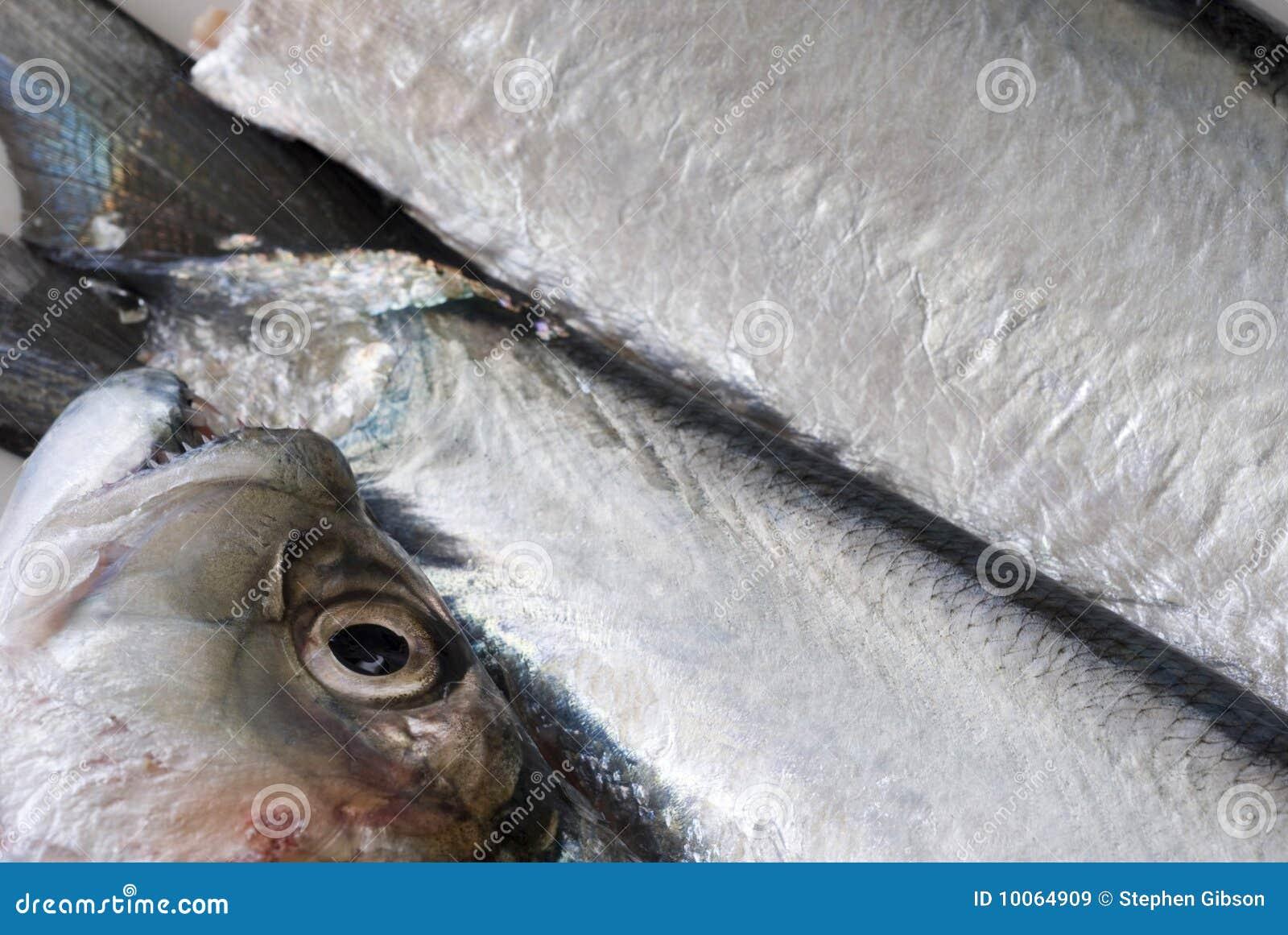 Peixes frescos