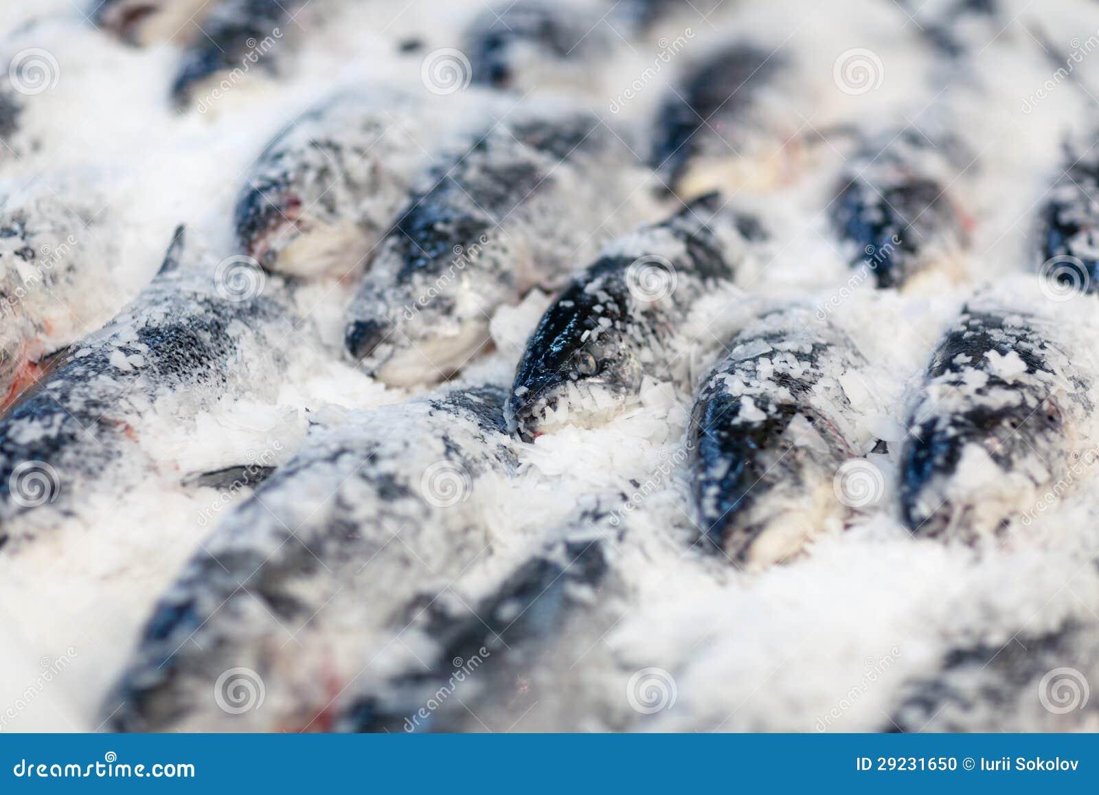 Download Peixes frescos no gelo foto de stock. Imagem de peixes - 29231650