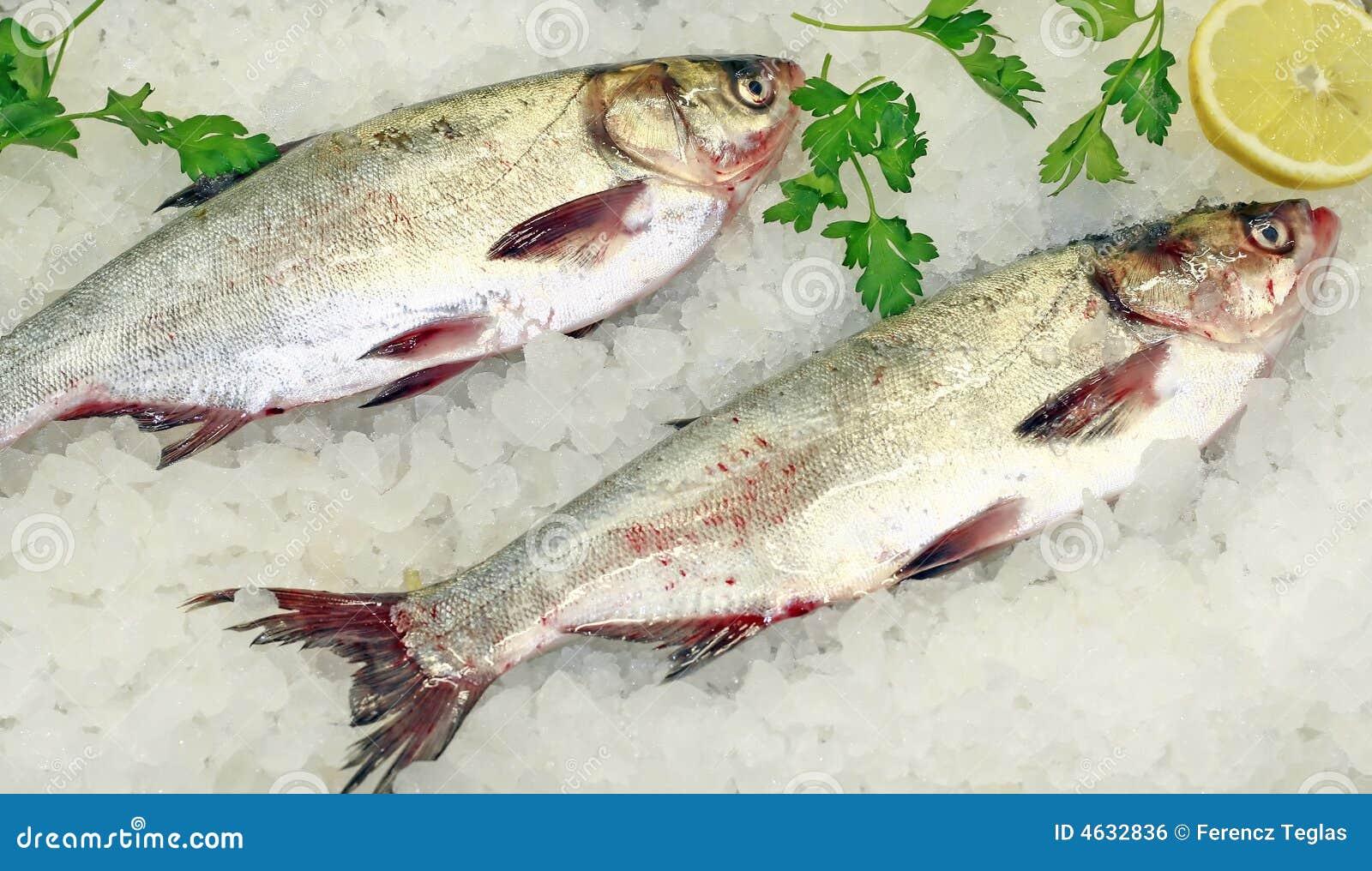 Peixes frescos no gelo