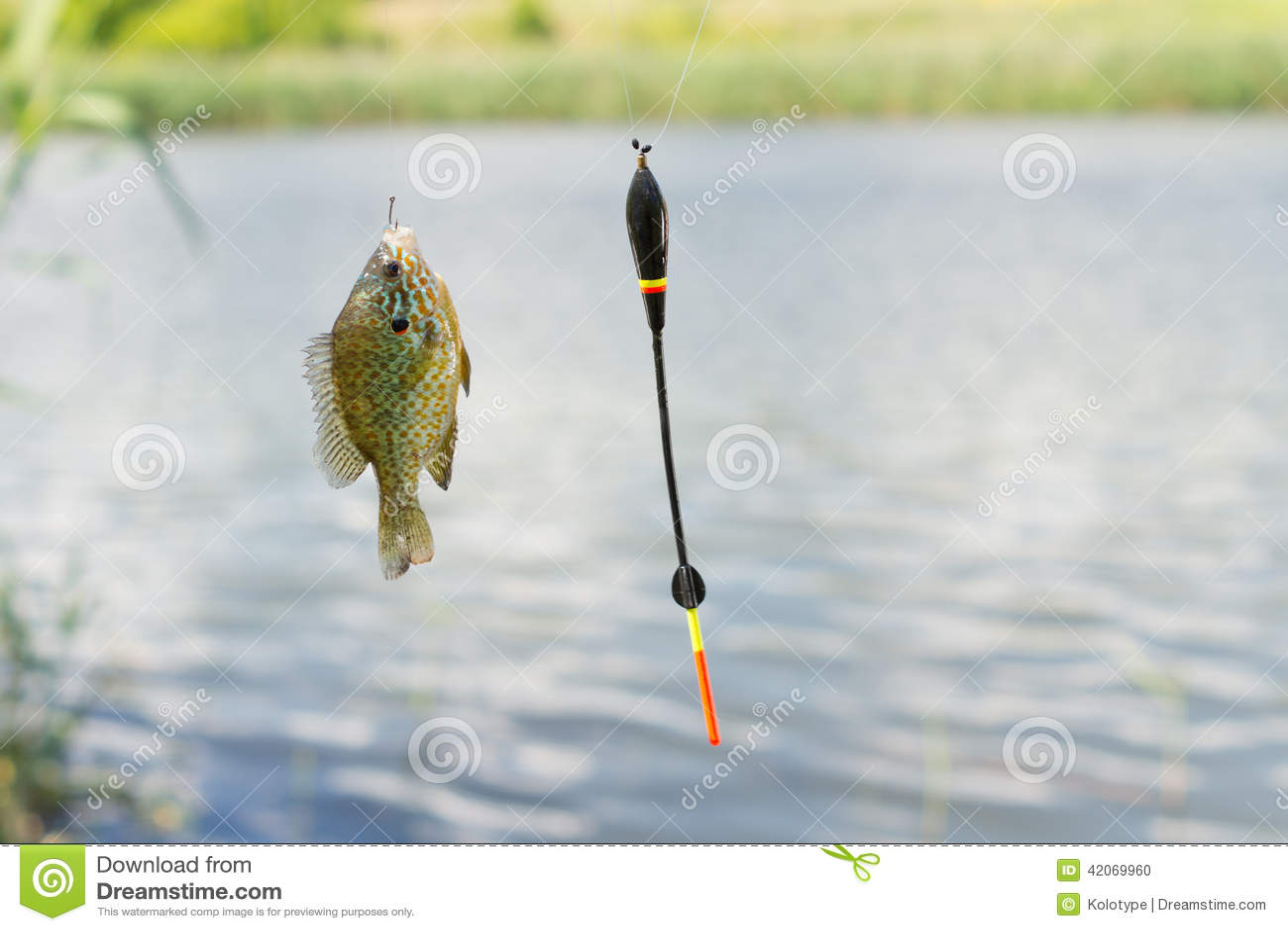 Peixes no gancho que oscilam da linha de pesca