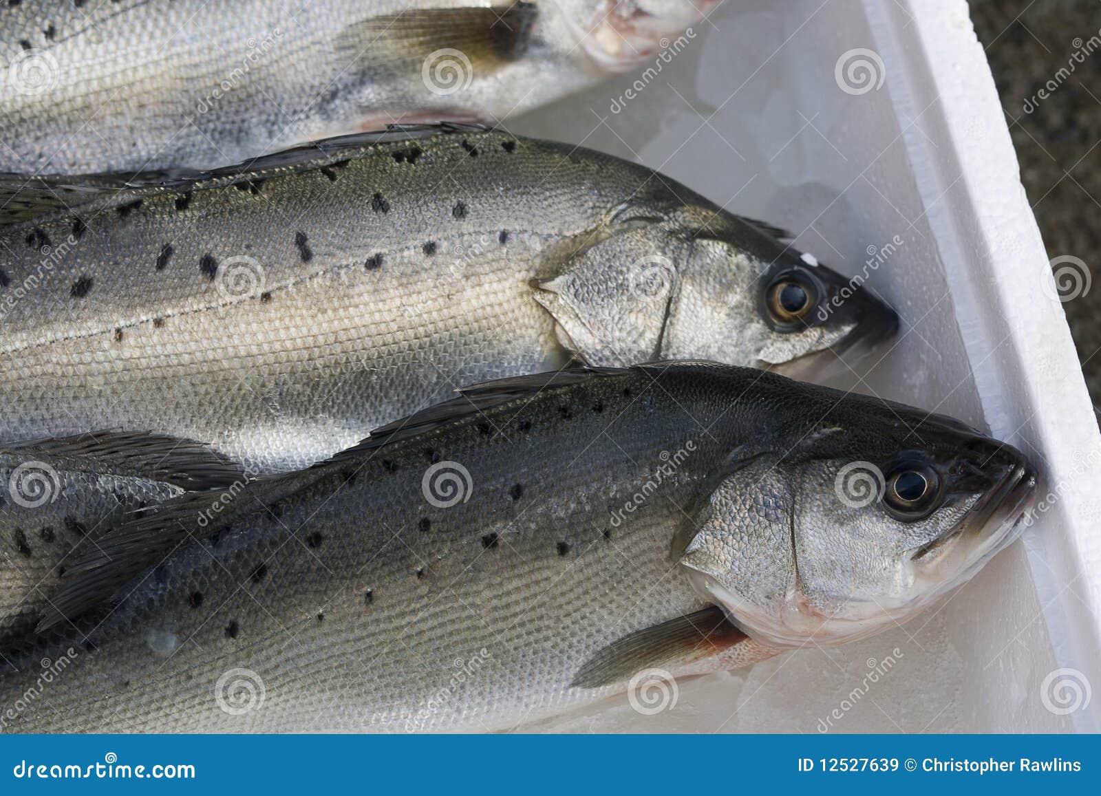 Peixes para a venda