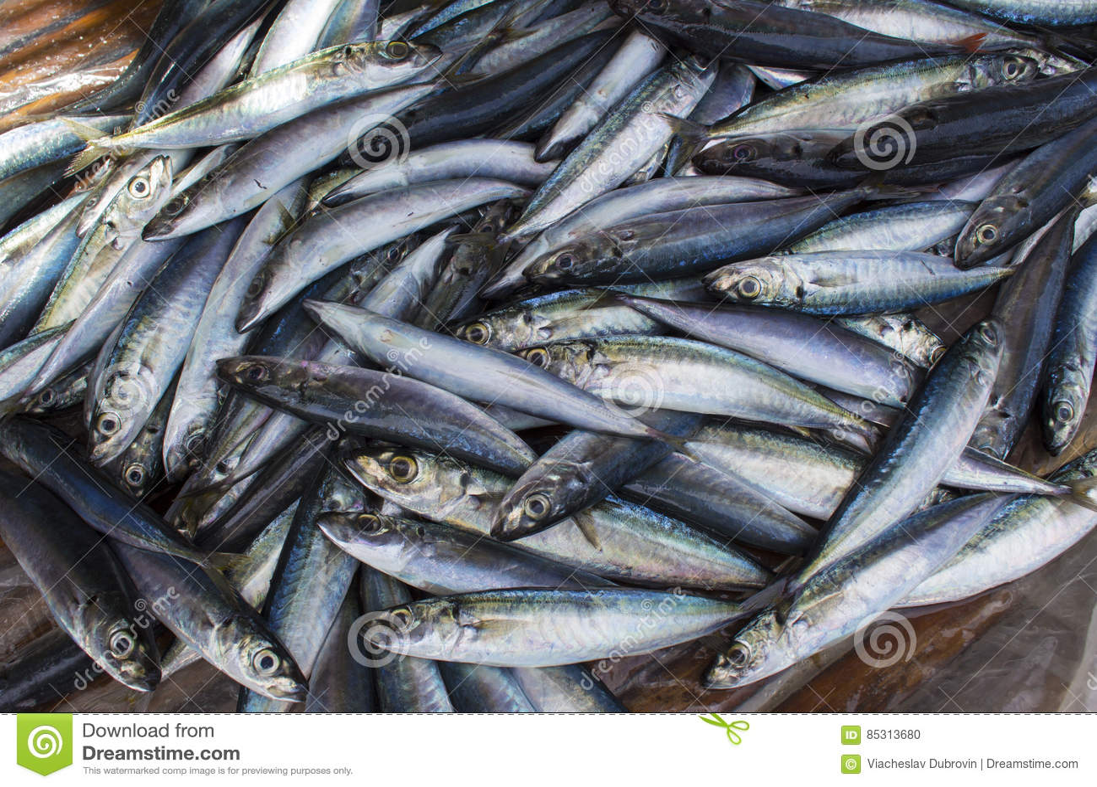 Peixes pequenos da cavala na exposição da loja Pilha dos peixes do mar para a venda Captura do pescador do beira-mar