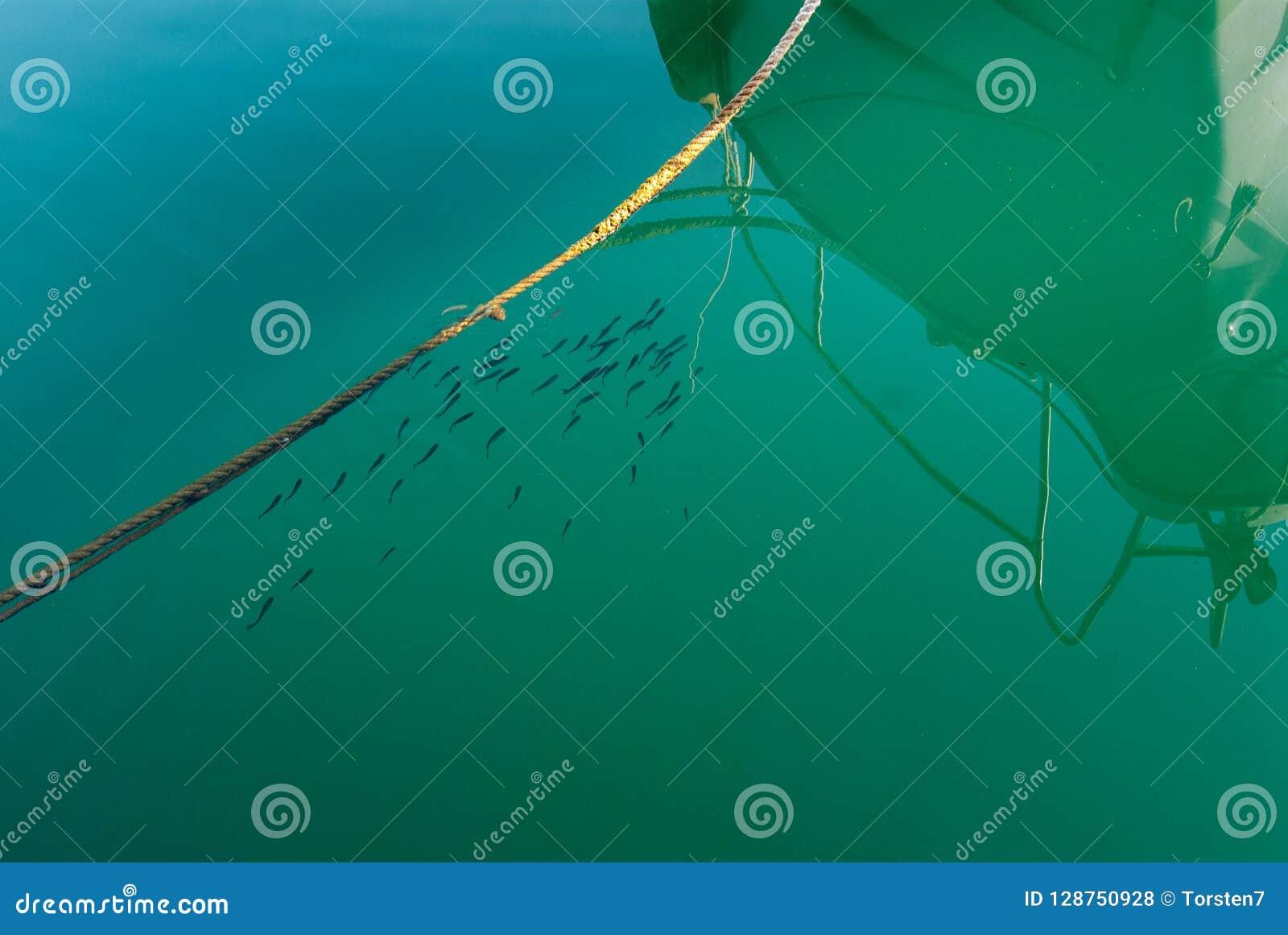 Peixes pequenos no porto perto do barco