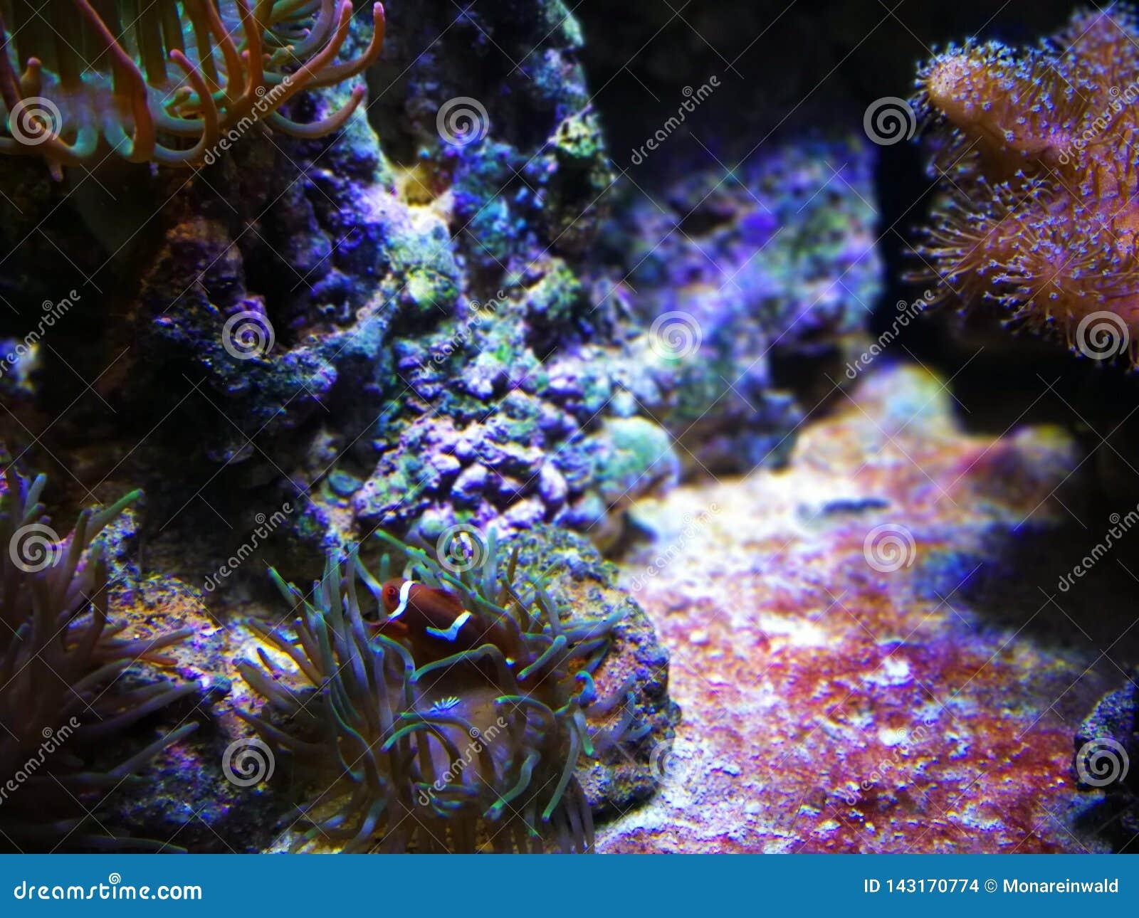 Peixes sob a água no aquário em Barcelona