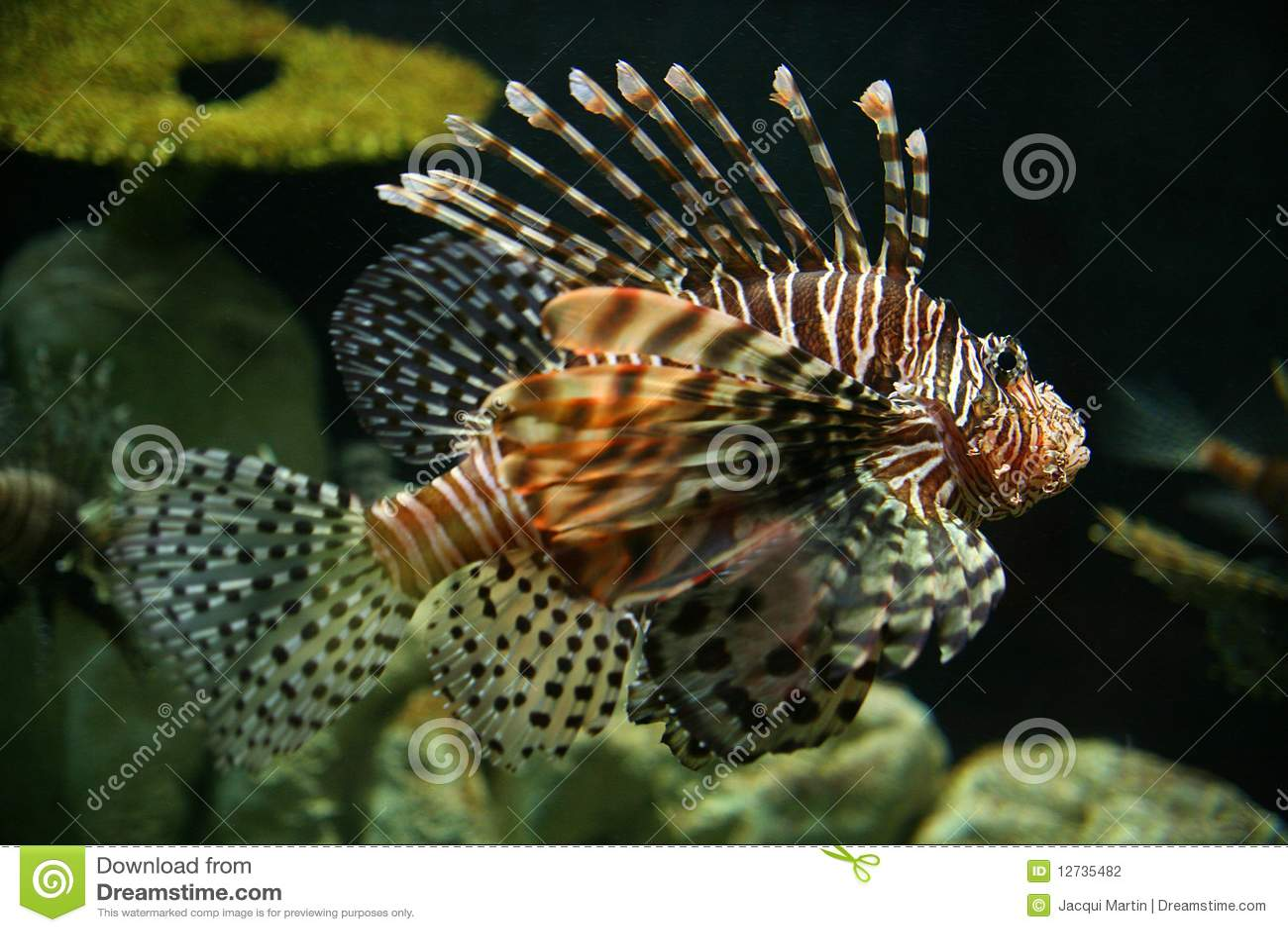 Peixes Spiky