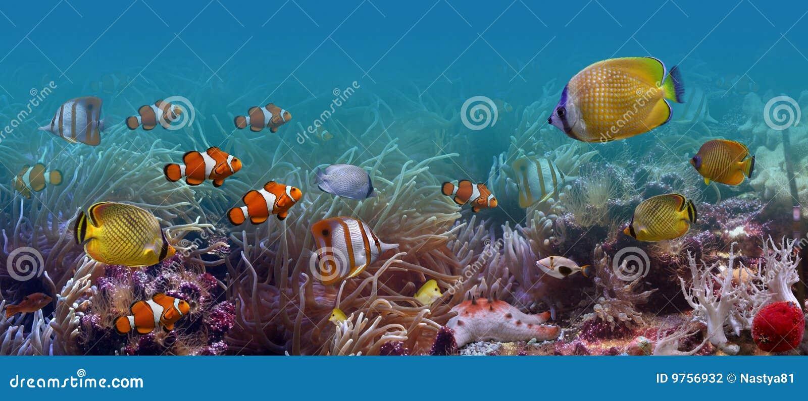 Peixes tropicais