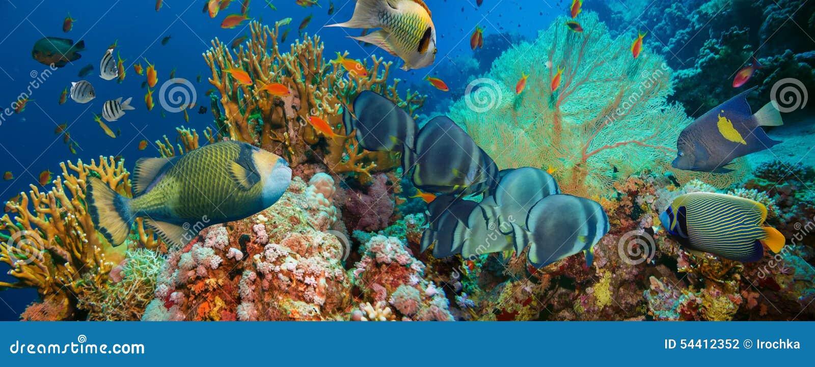 Peixes tropicais de Anthias com corais líquidos do fogo