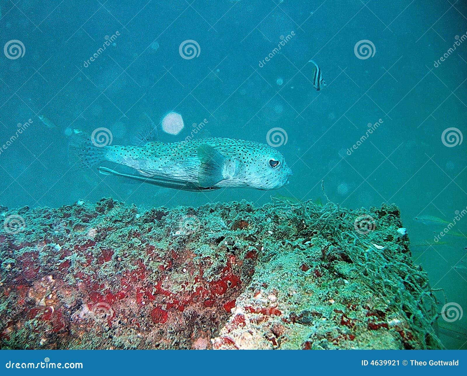 Peixes tropicais e recife coral