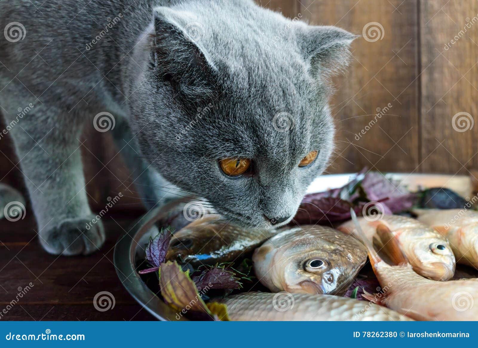 Peixes vivos da captura fresca & x28; carp& x29; e um gato que queira o comer