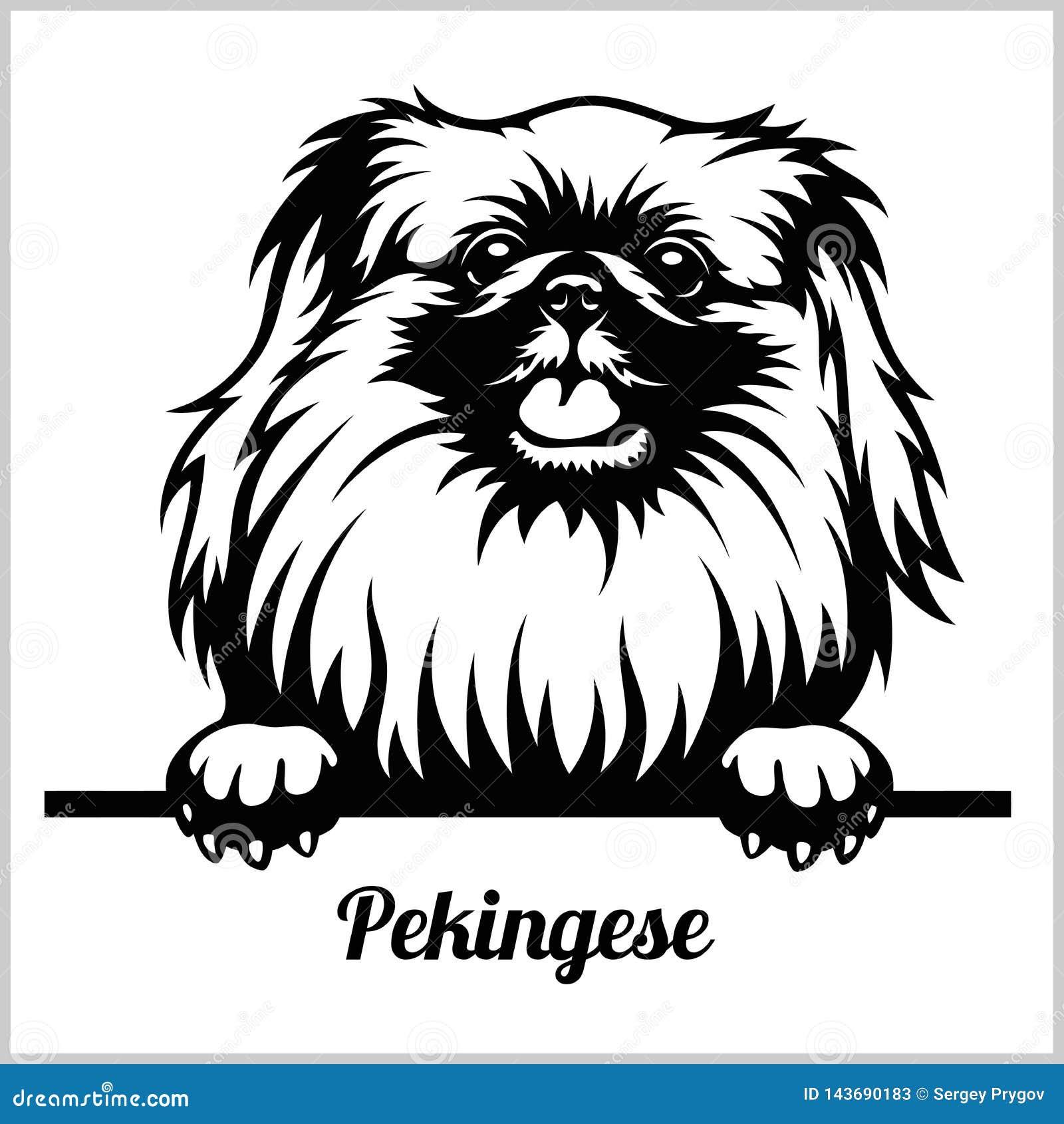 Pekingese Cartoons Illustrations Amp Vector Stock Images