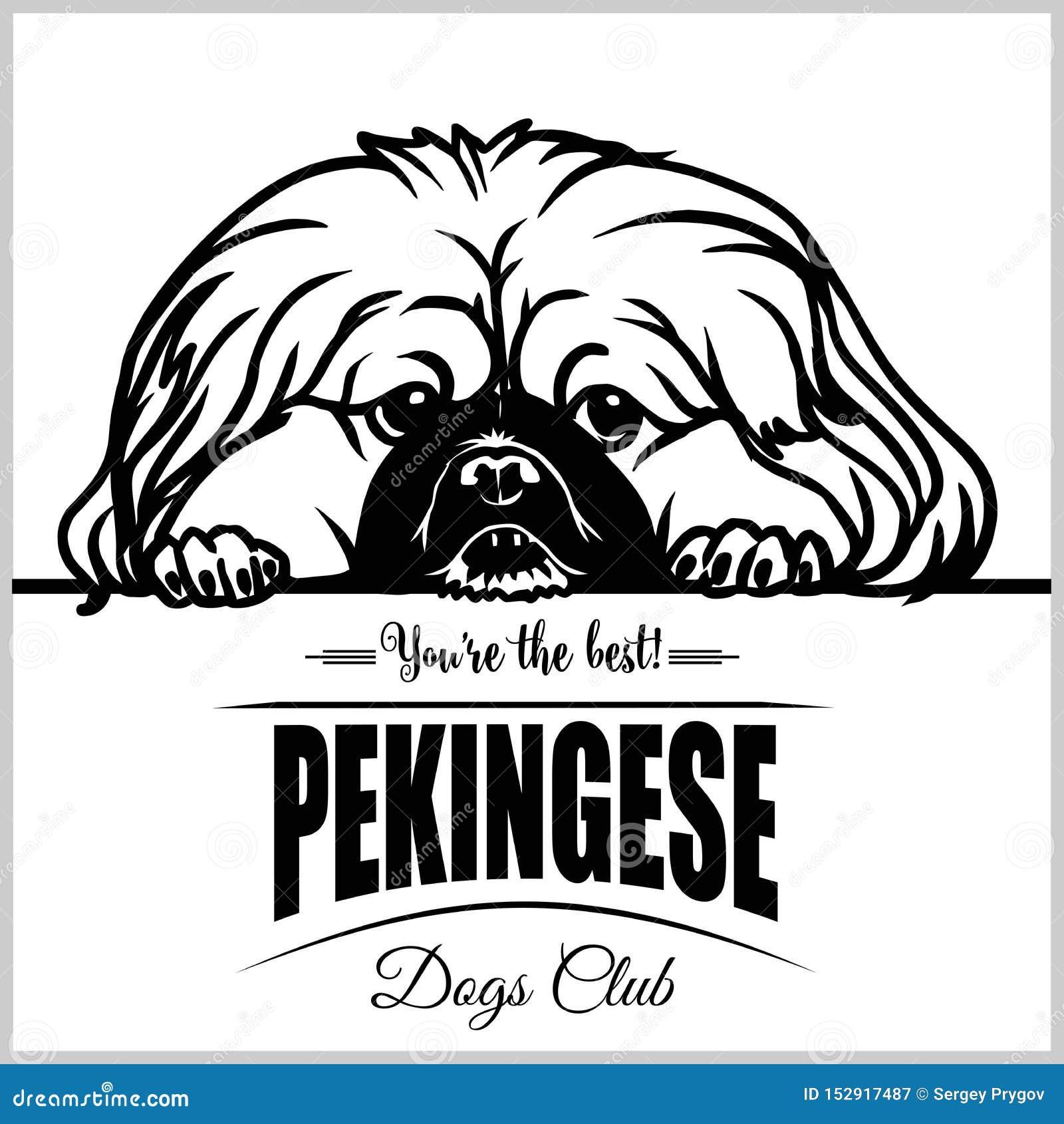 Pekingese - T恤杉、商标和模板徽章的传染媒介例证