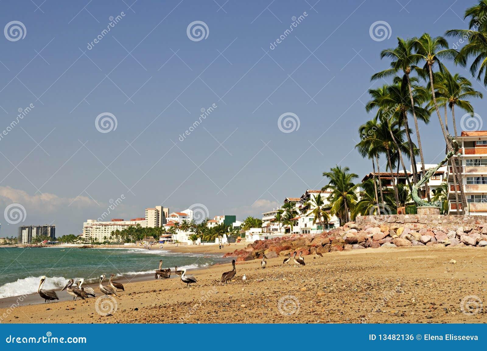 Pelícanos en la playa en México