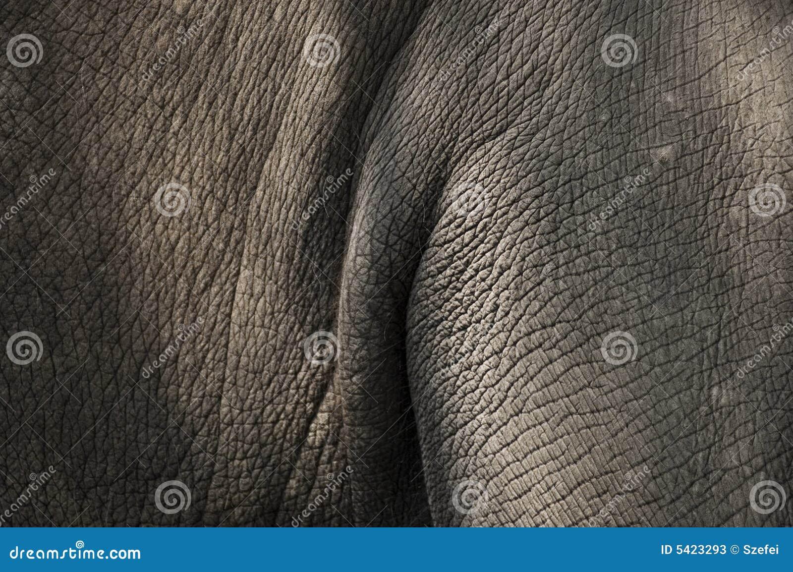 Pele do elefante