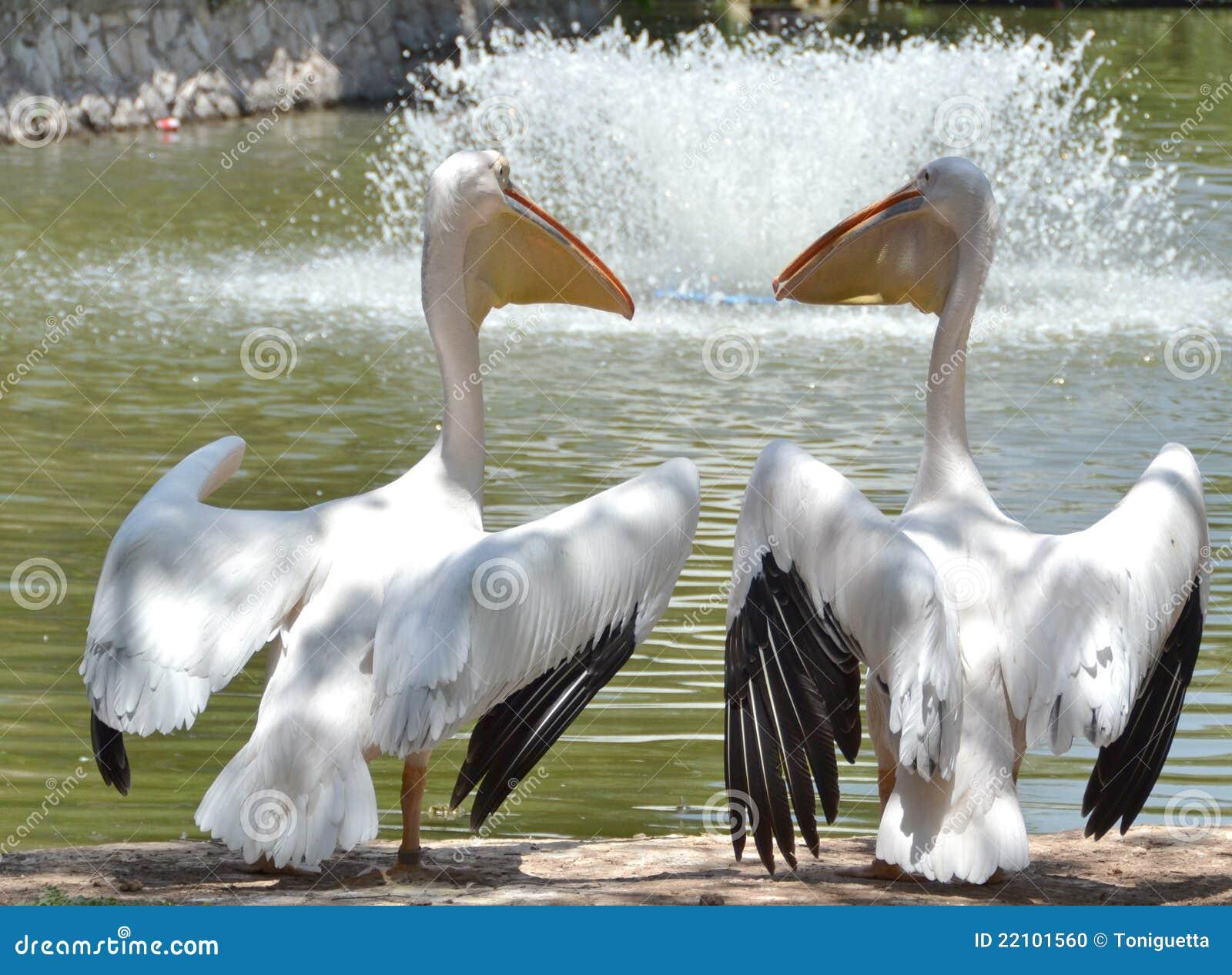 pelican lake single muslim girls Pelican rapids was a stroke back with 202, followed by hawley 214, frazee 220,  dilworth-glyndon-felton 234, and breckenridge 286 perham.