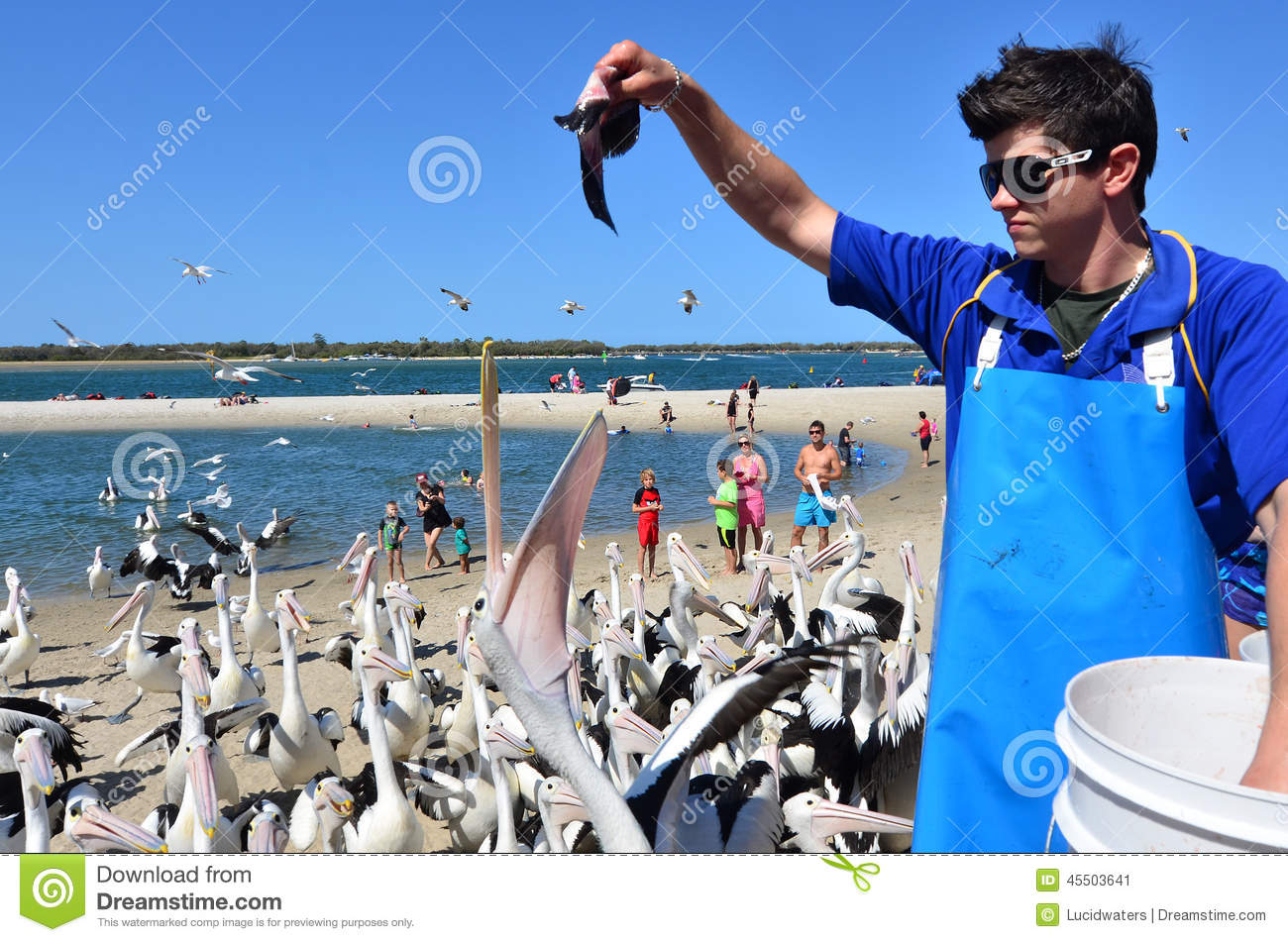 feeding frenzy lab Welcome to my webpage in the links above, you can navigate to see what your students will be learning about in the classes i teach and be able to link to websites that are fun and related to each of the subjects.