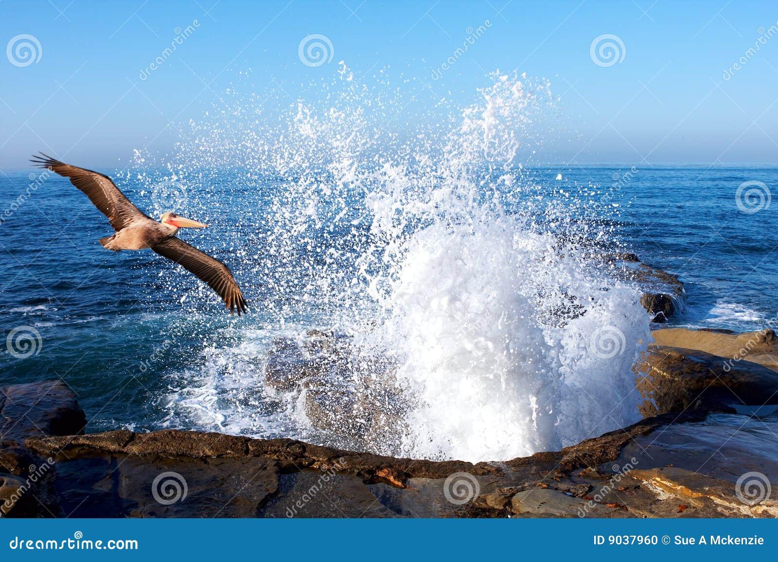 Pelican Soaring Through Splashing Ocean Waves