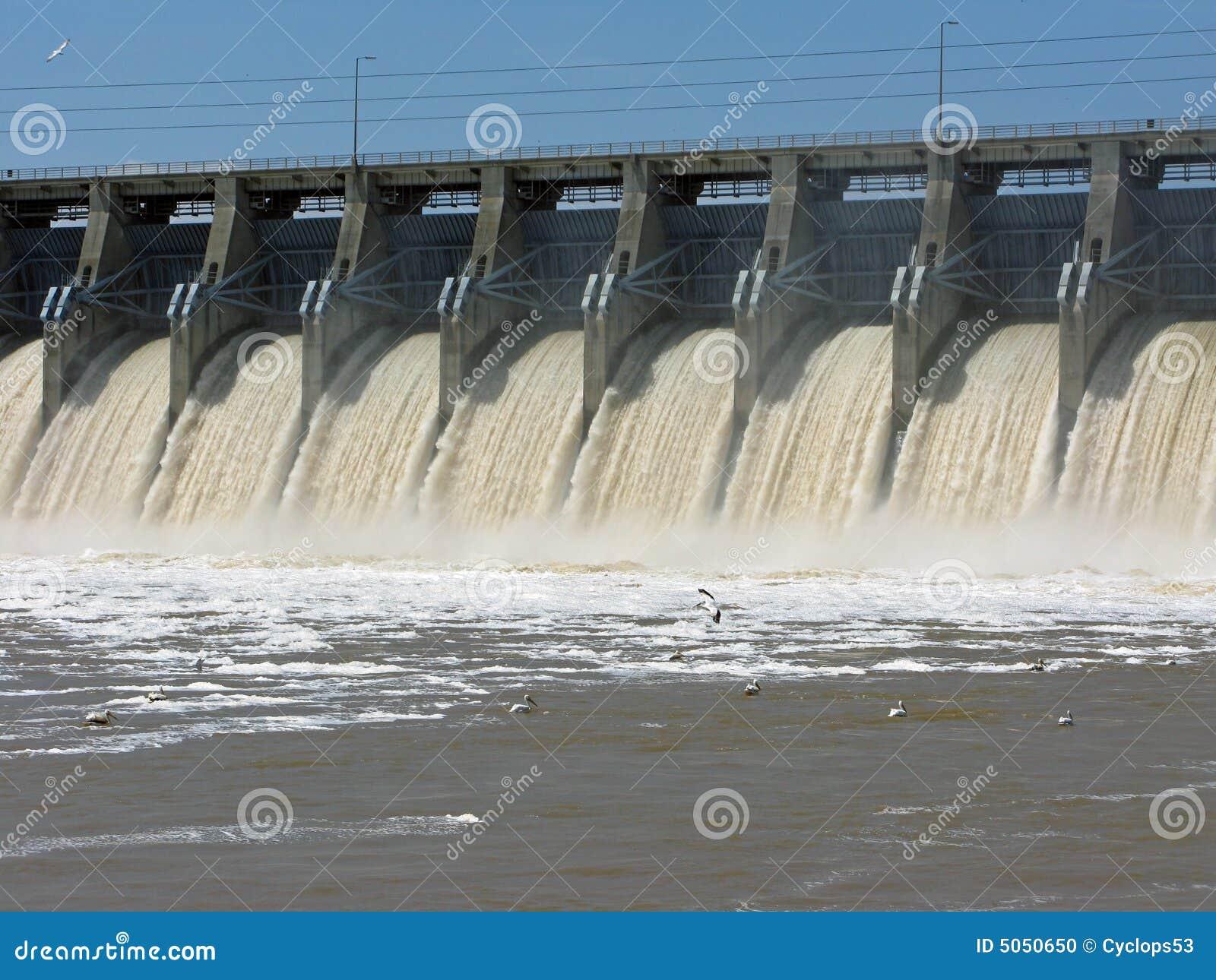 Pelicans fishing below the dam
